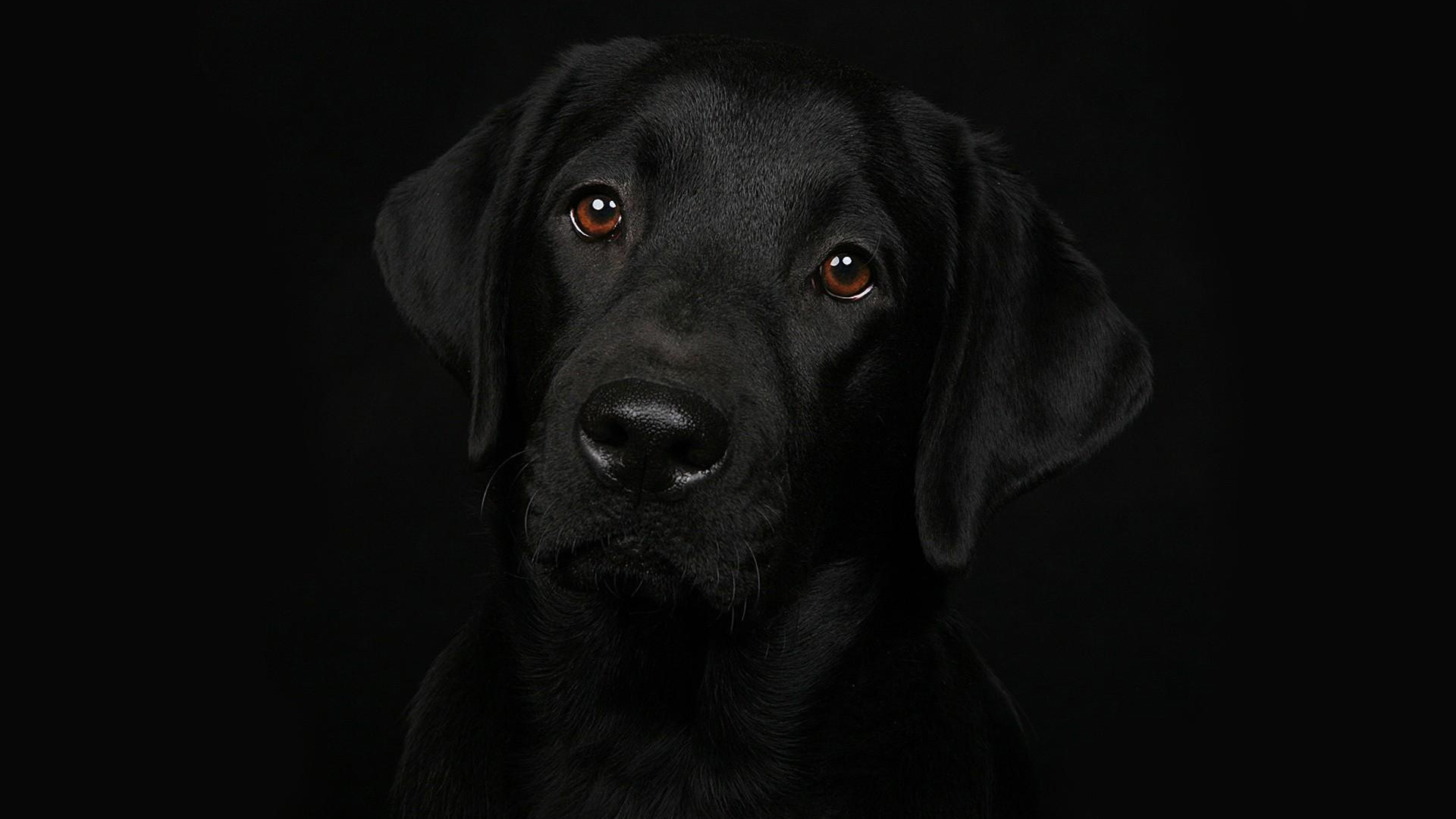 Black Dog Image » Earthly Wallpaper 1080p