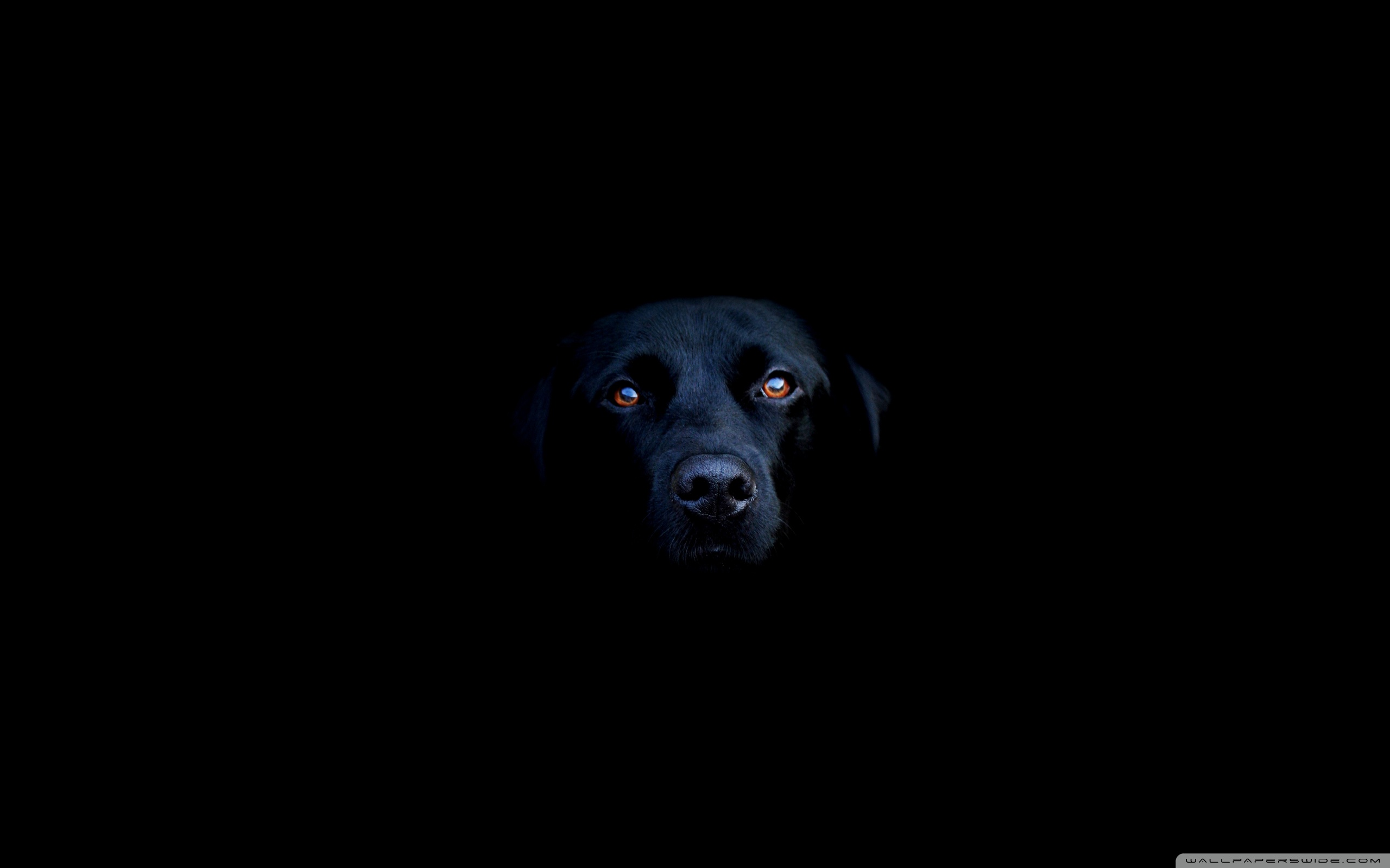 Black Dog ❤ 4K HD Desktop Wallpaper for 4K Ultra HD TV • Wide ...