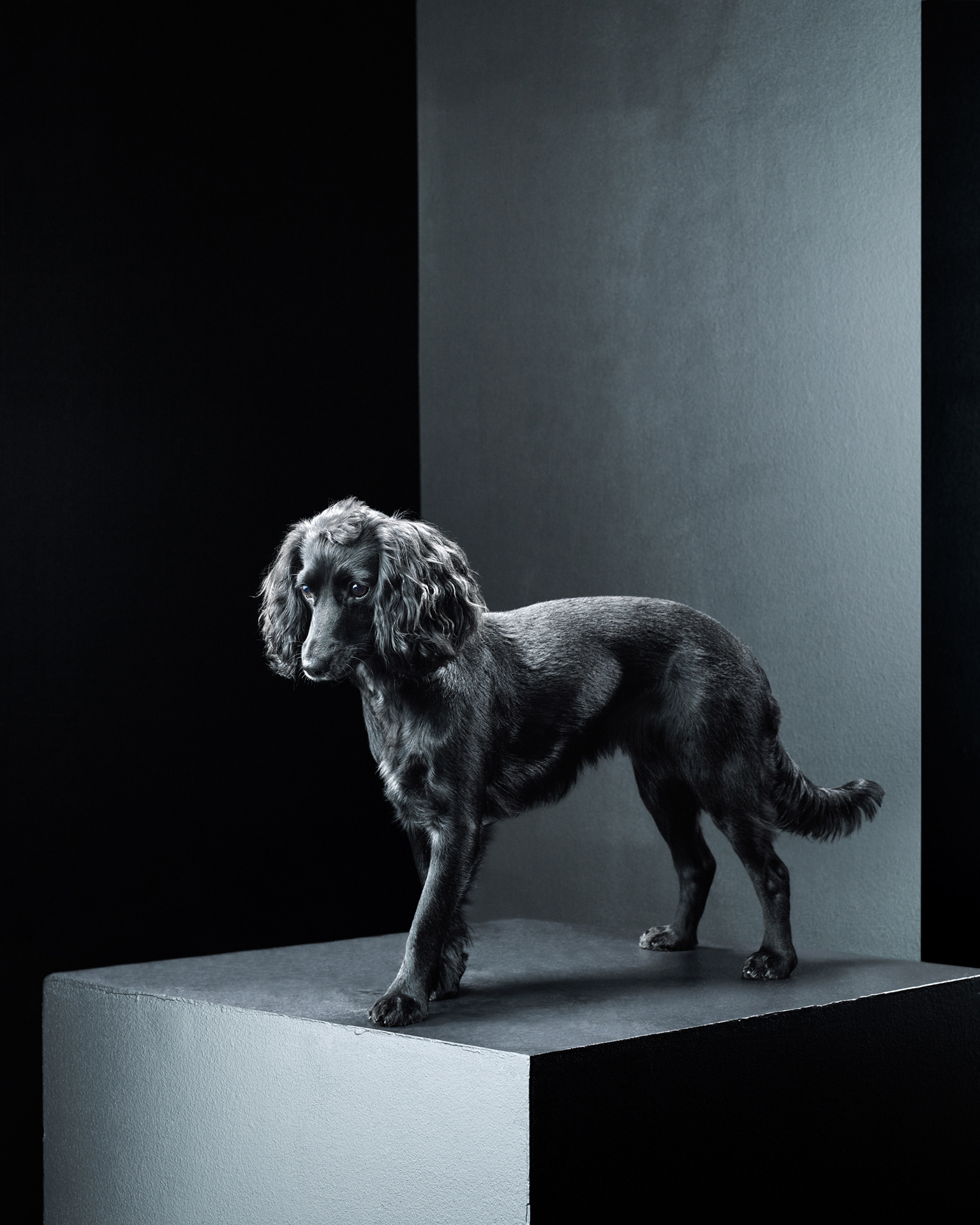 Dylan Collard › Black Dog Project