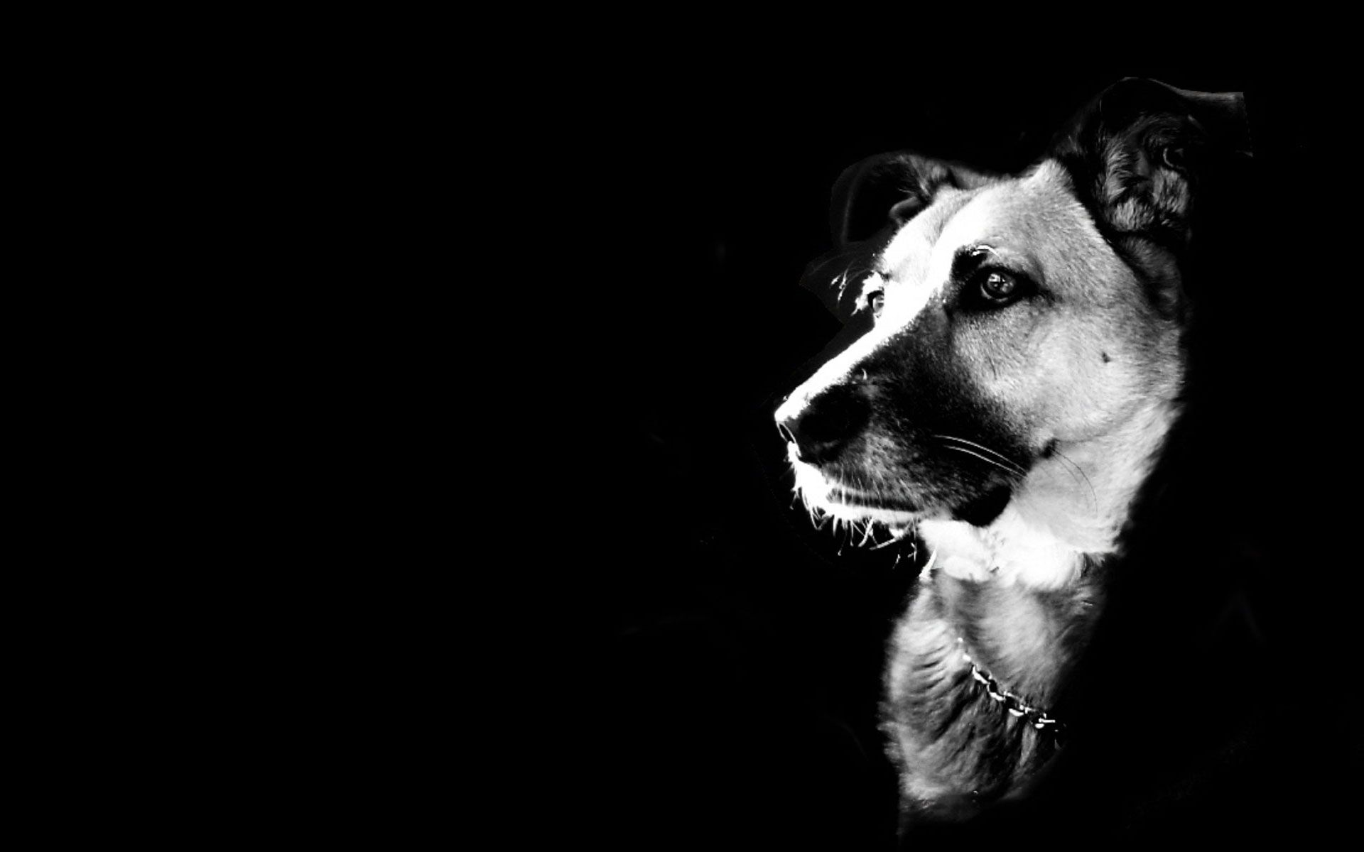 Black Dog | High Definition Wallpapers (HD Wallpapers 1080p ...