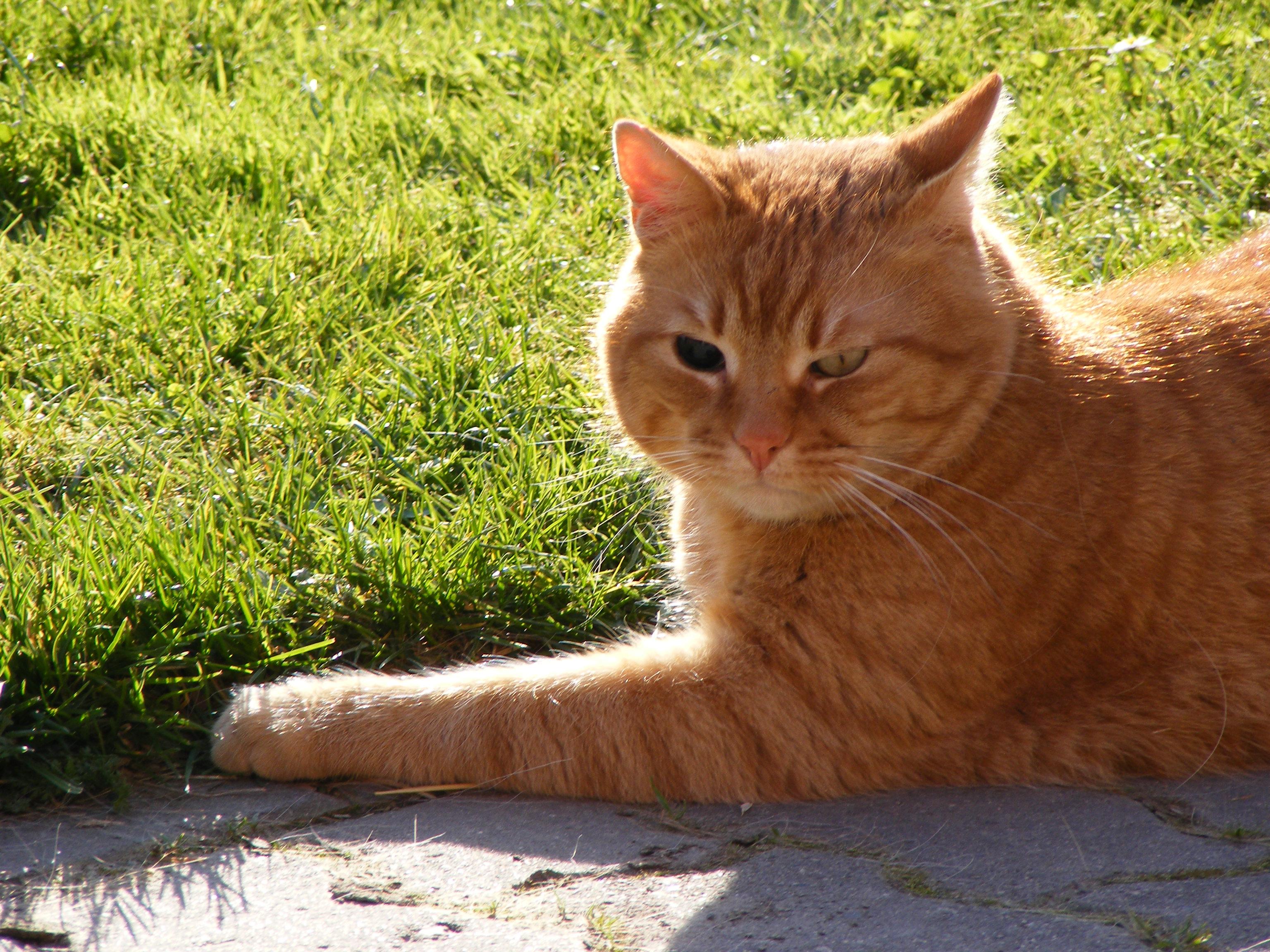 Black eyed cat photo