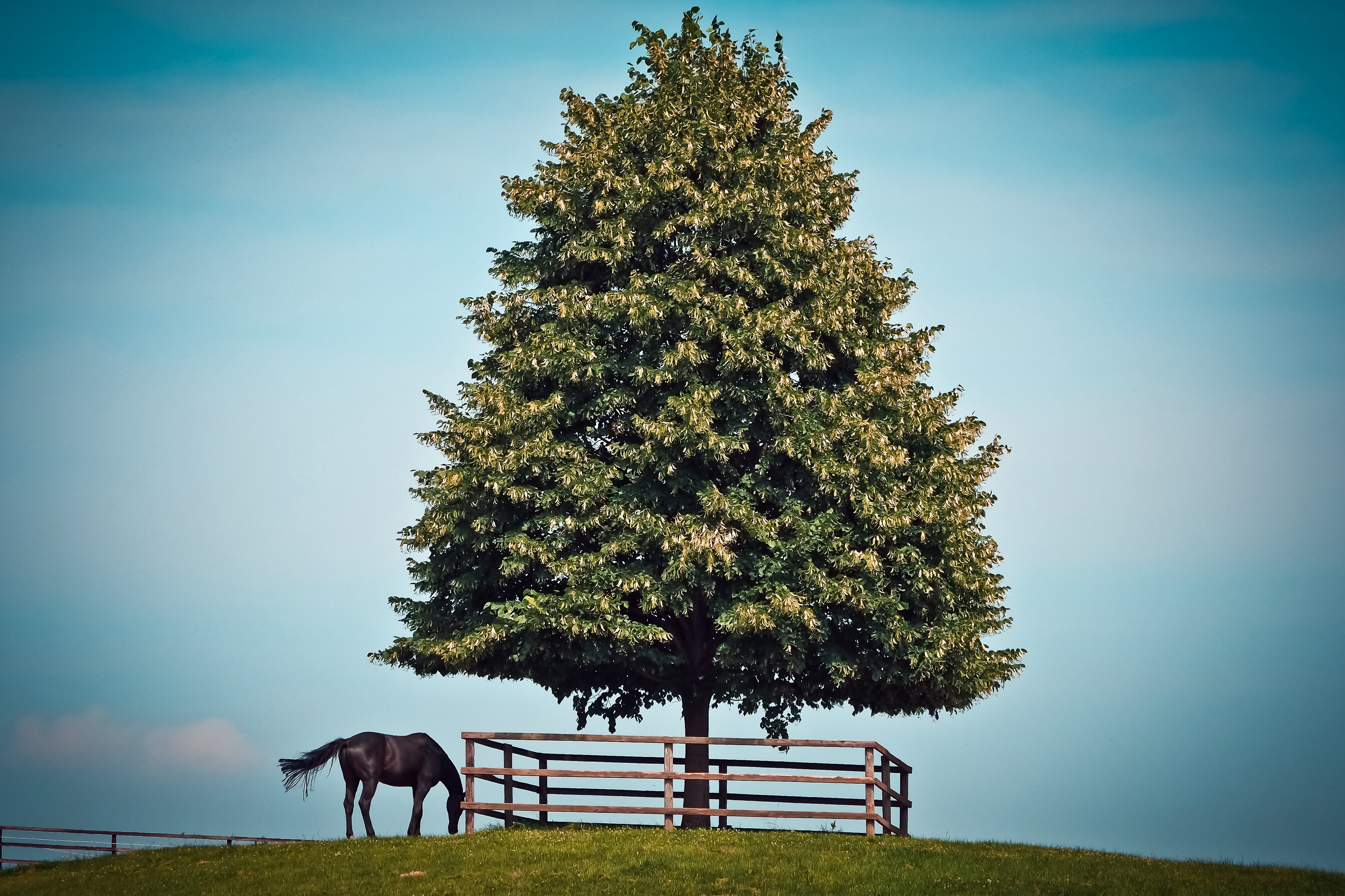 Black horse beside green leave tree photo