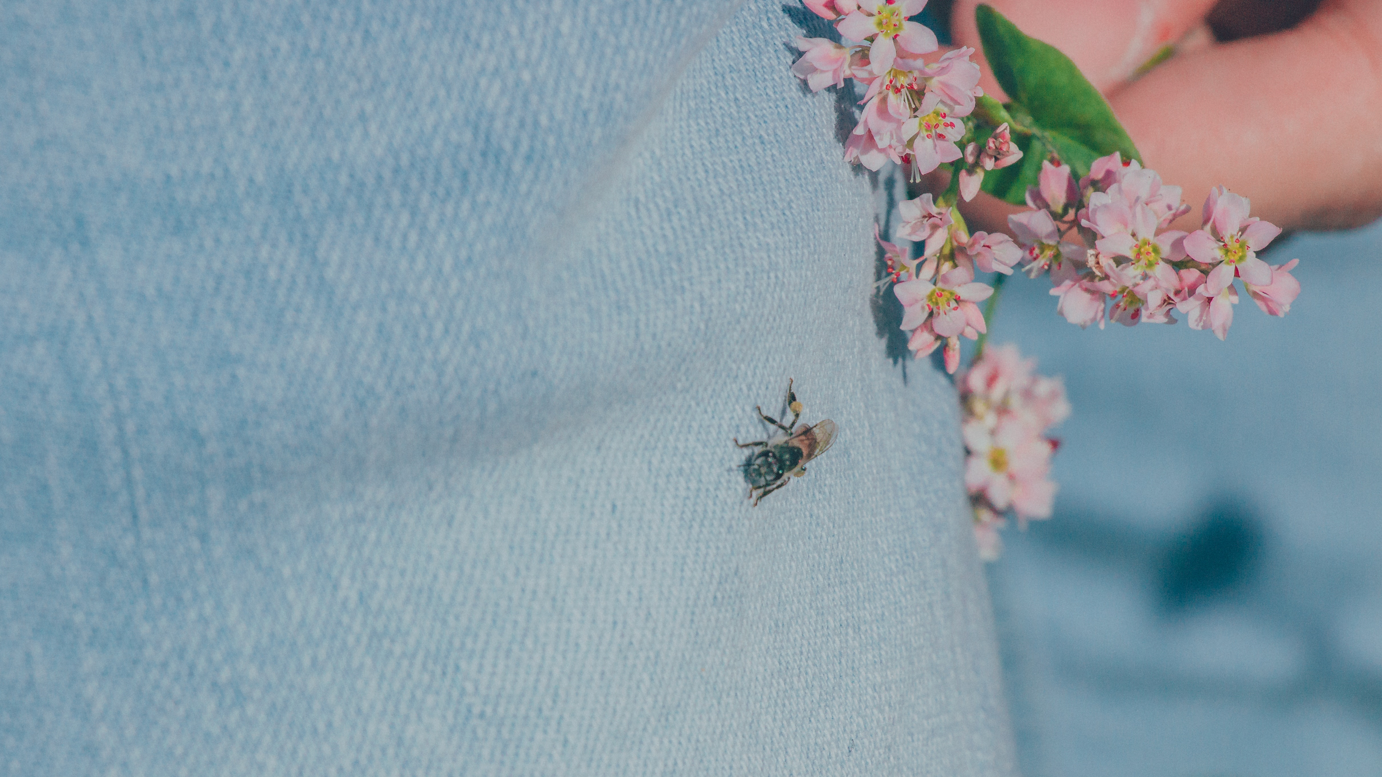 Black housefly on person's jeans photo