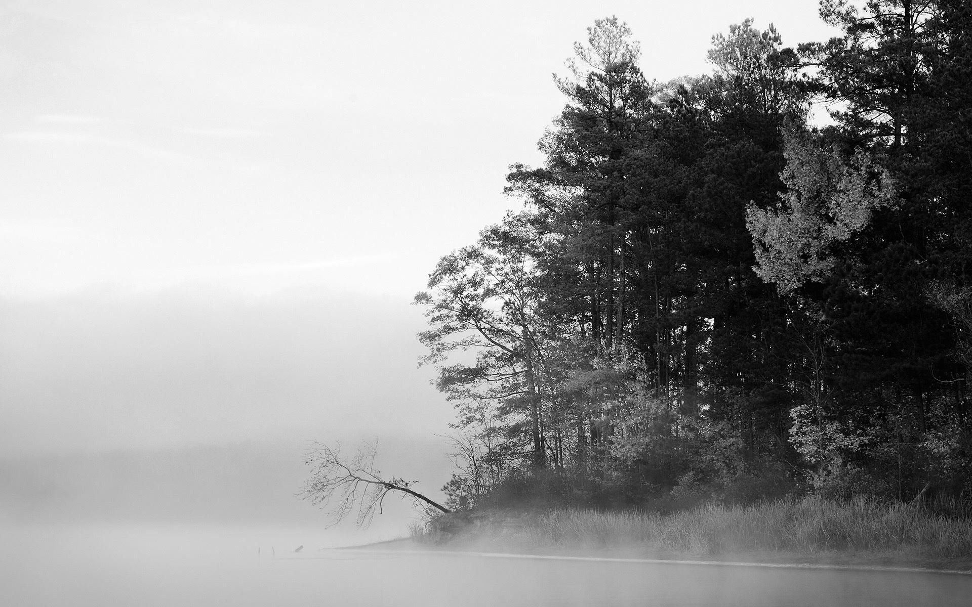 Black-n-white - Photo gallery | MIRIADNA.COM