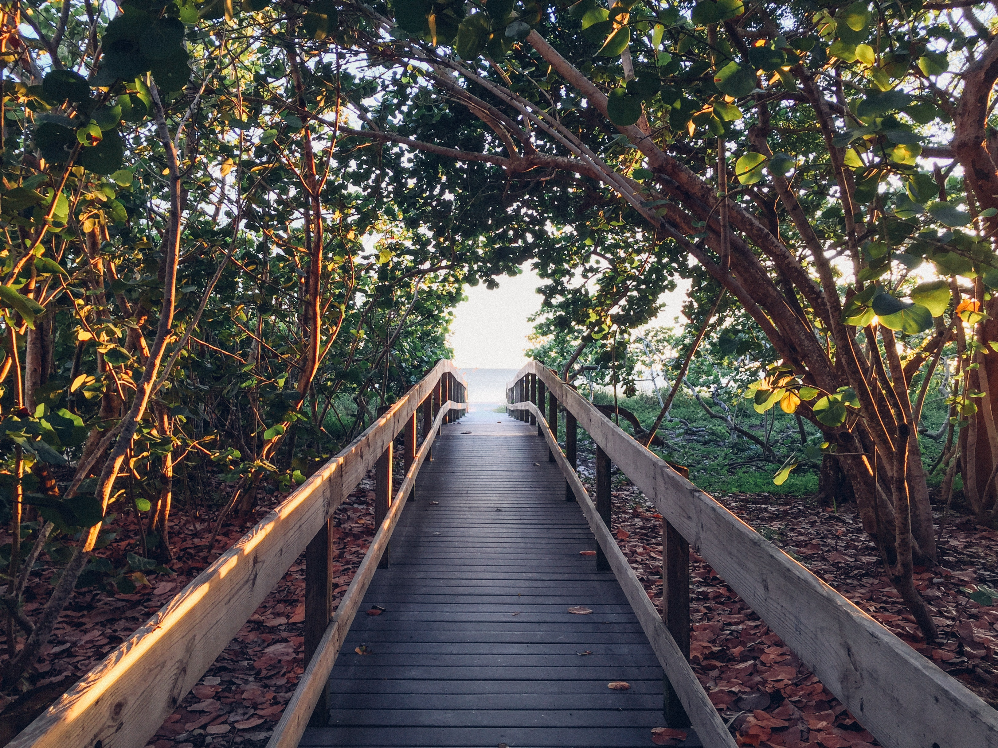 Black Pathway Between Green Trees Towards Body of Water during Daytime, Beach, Boardwalk, Branches, Leaves, HQ Photo