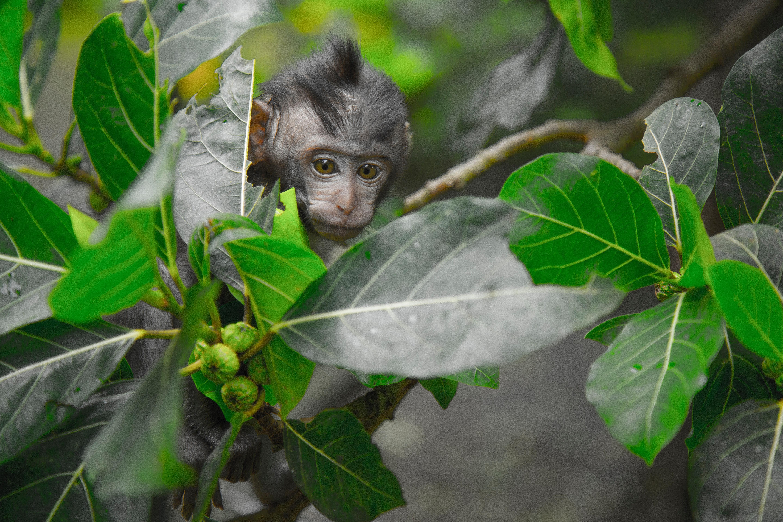 Black primate seeking behind green leaf tree photo