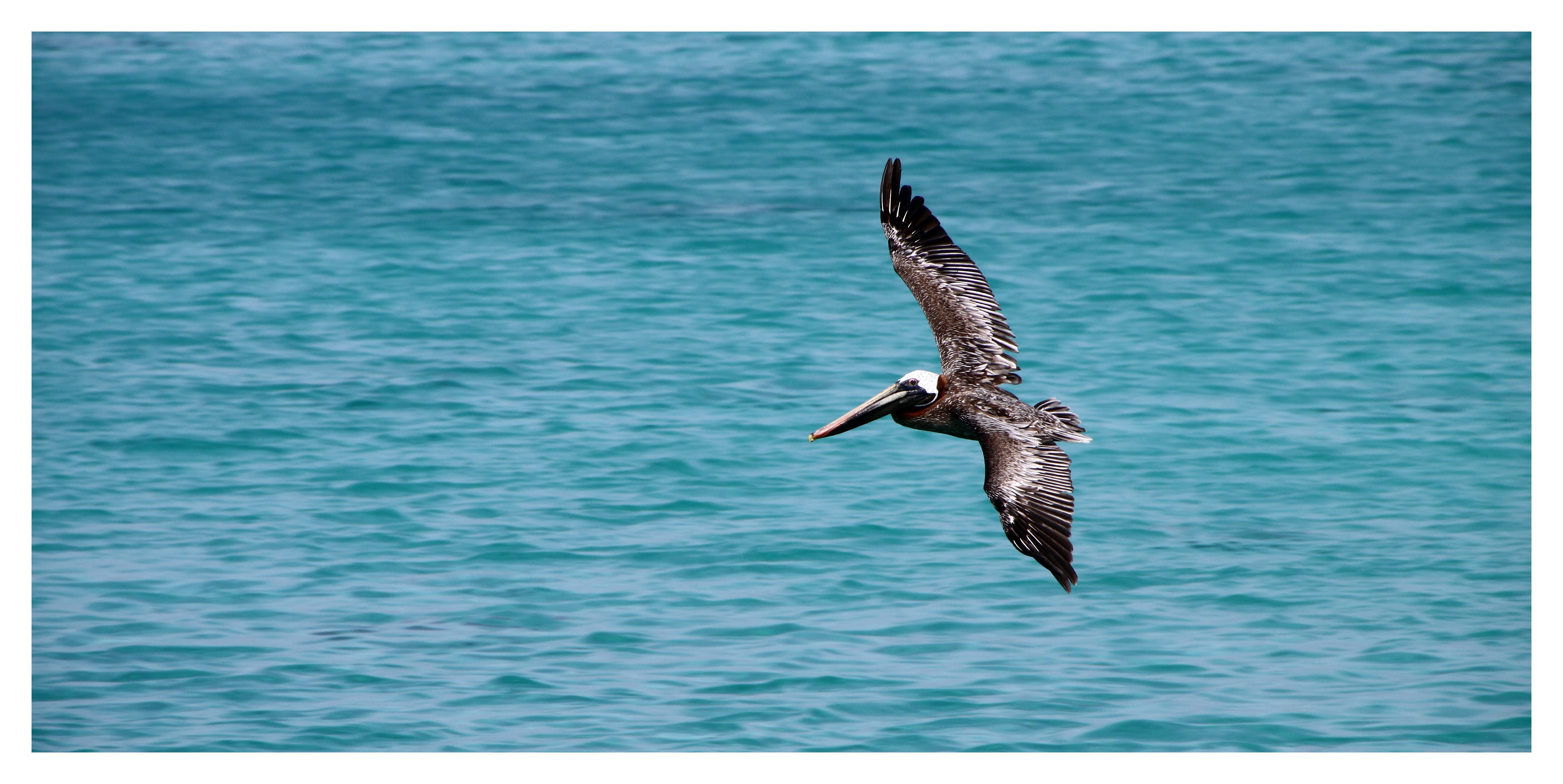 Black Sea Gulf Flying on Water Surface during Daytime, Bill, Bird, Flying, Ocean, HQ Photo