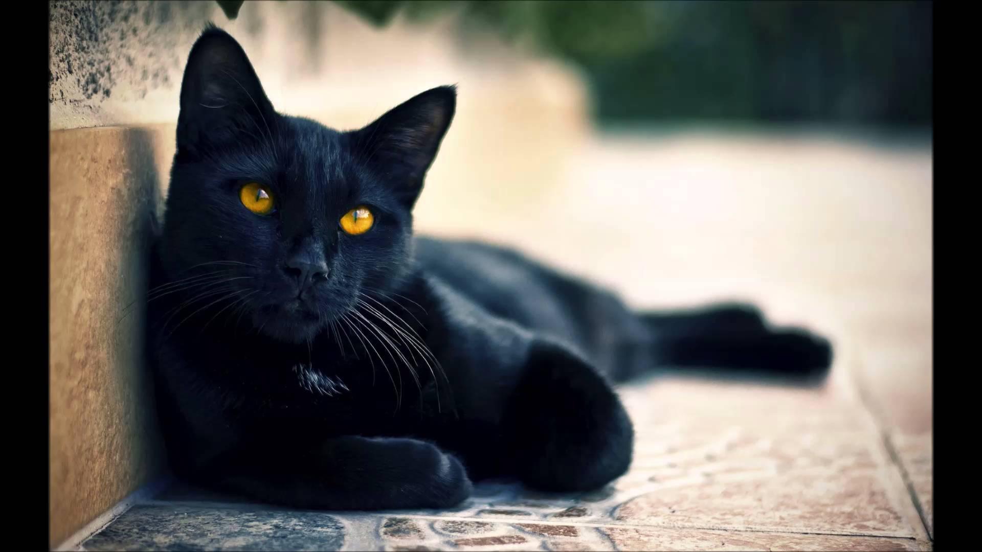 Black Cat - Janet Jackson - YouTube