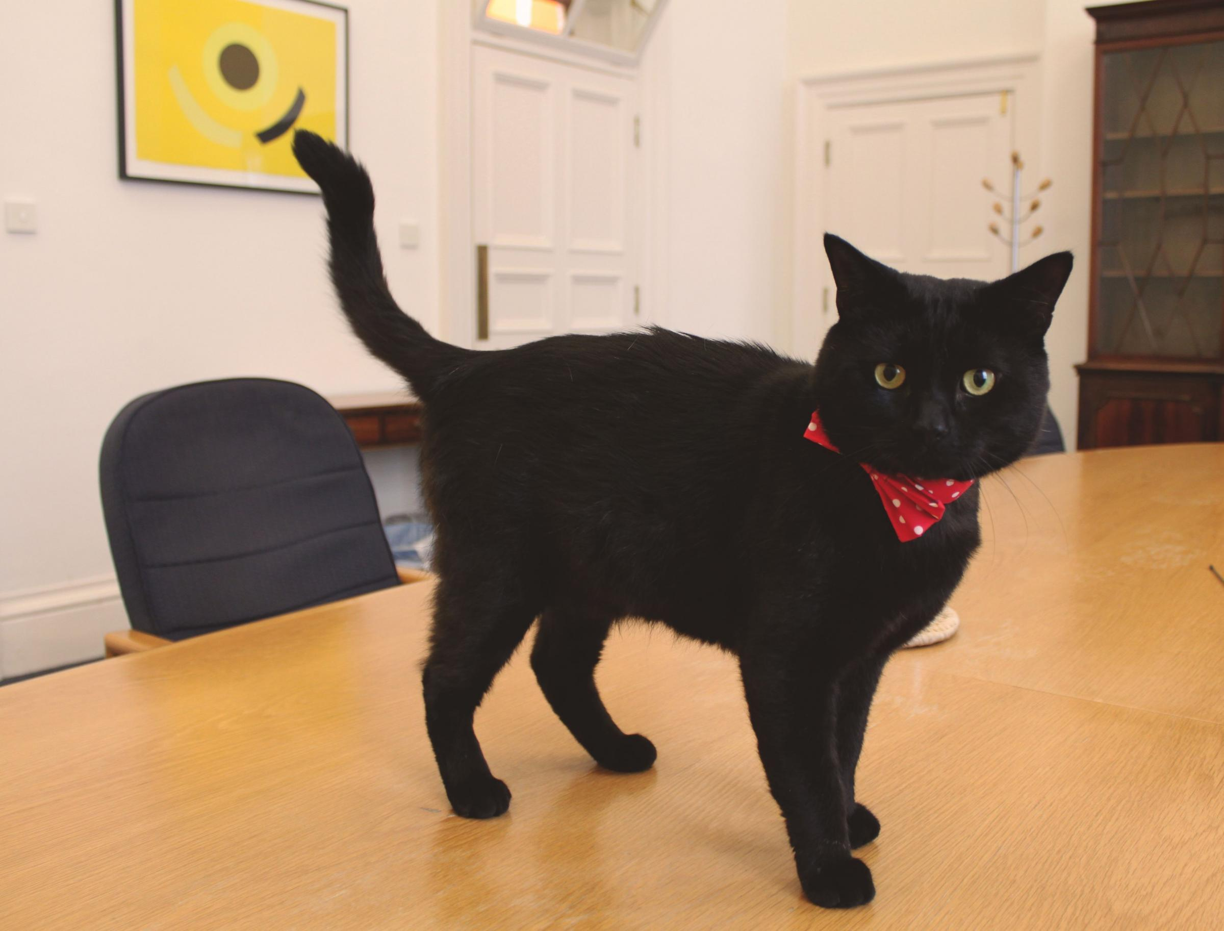 New cat Gladstone joins Whitehall feline elite at Treasury ...