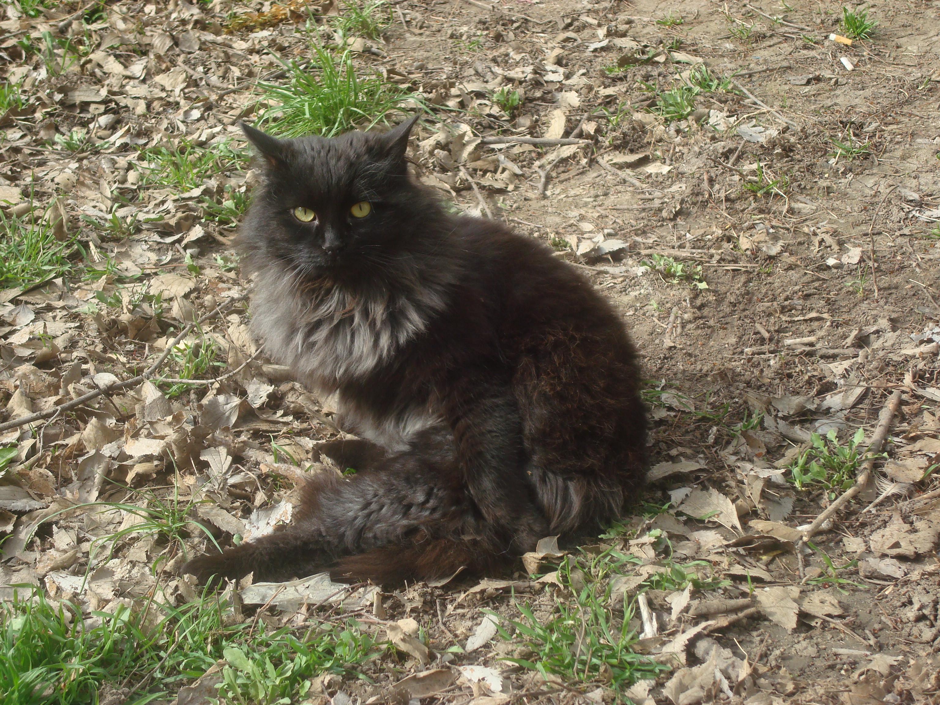 Black street cat, Animal, Nature, Wild, Urban, HQ Photo