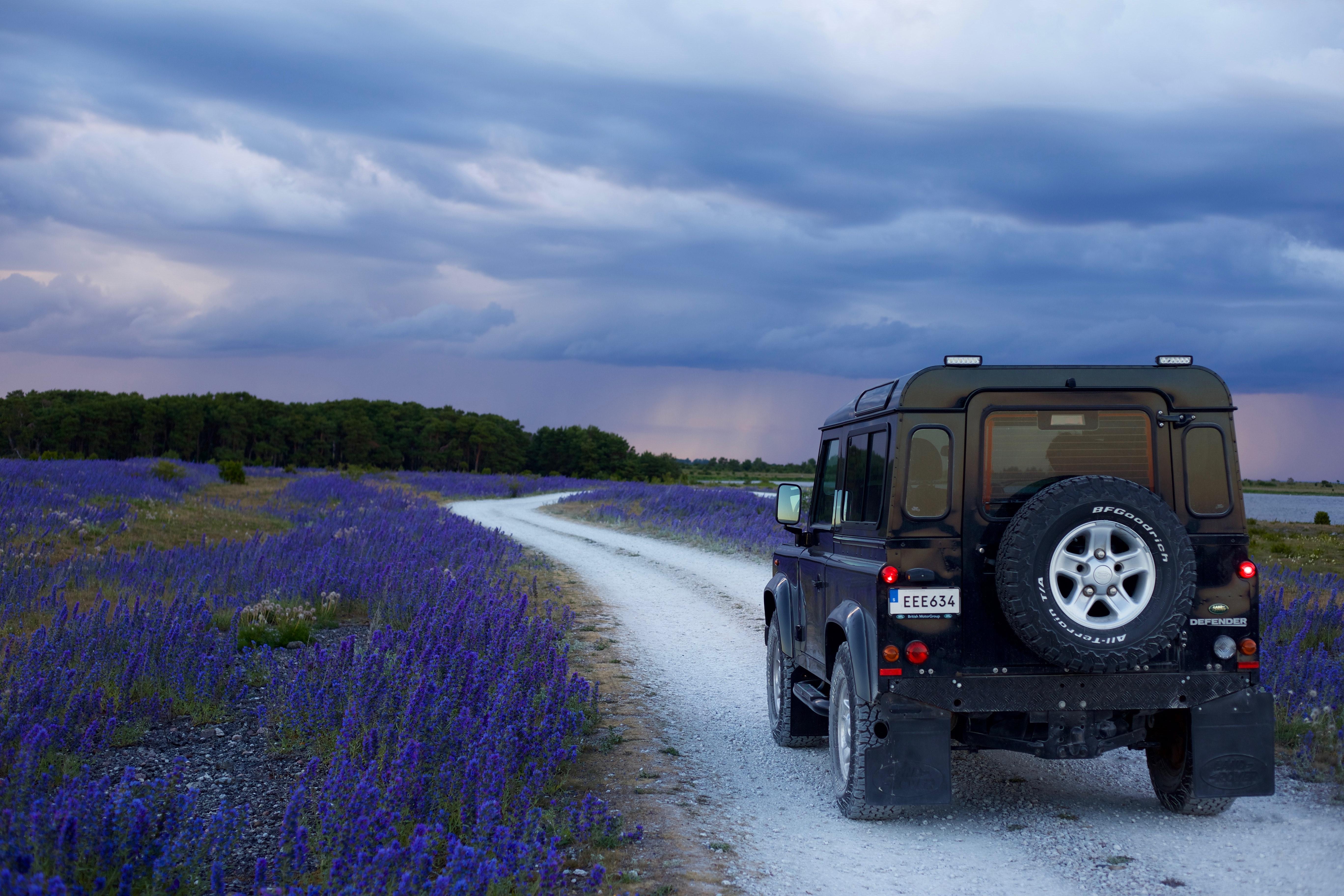 Black suv in between purple flower fields photo