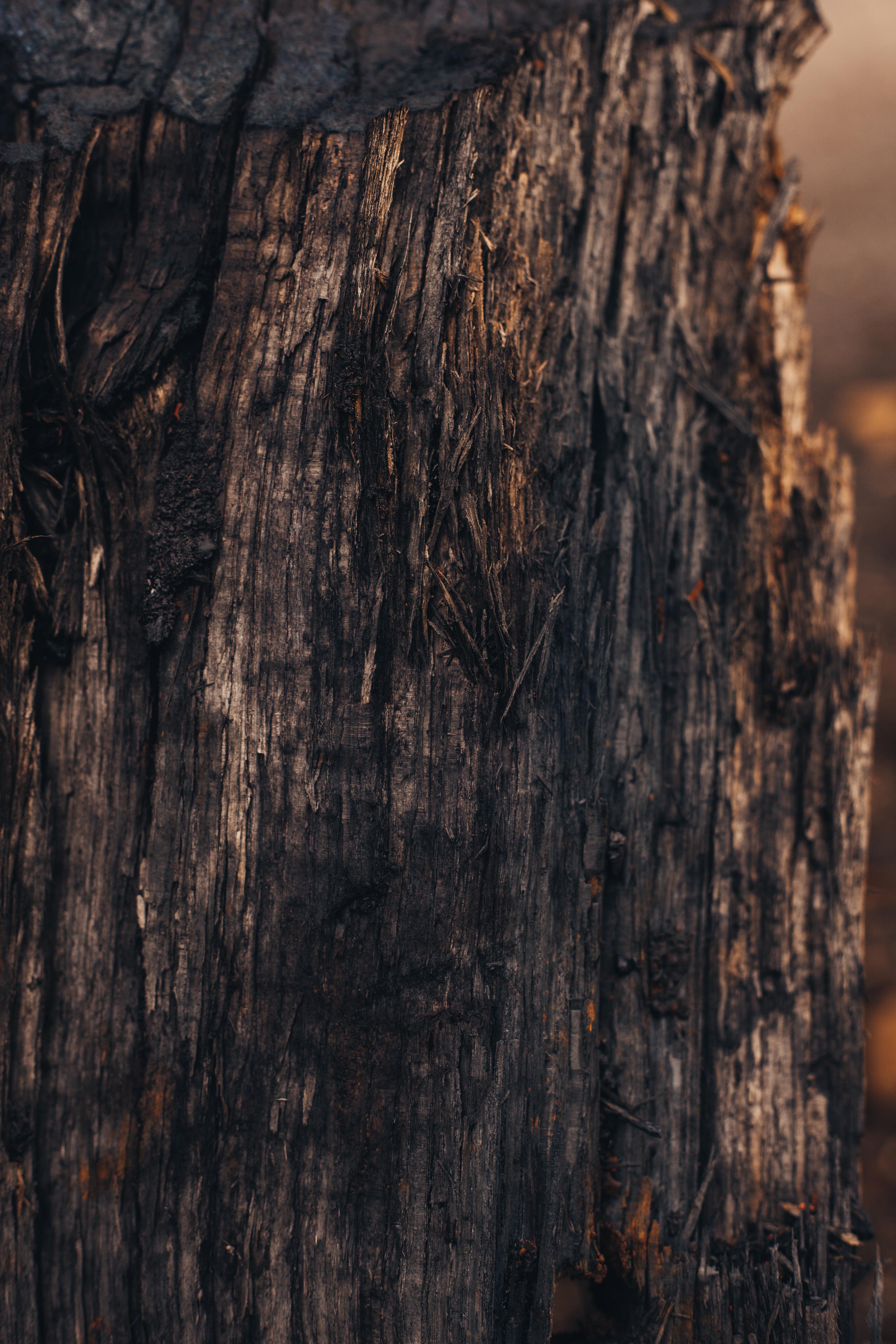 Black Wood Texture, Dark, Gloomy, Grunge, Grungy, HQ Photo