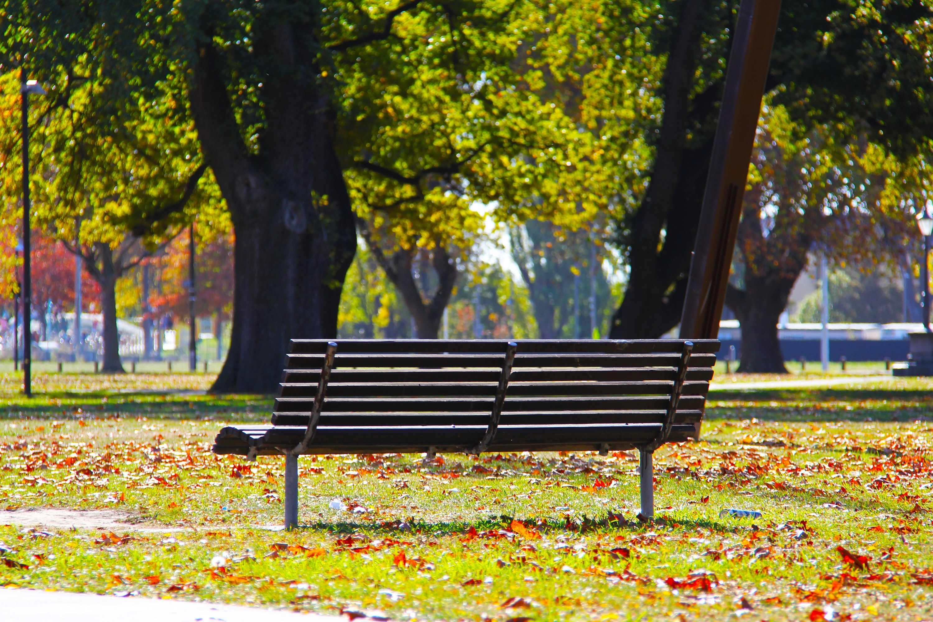 Black Wooden Bench on Green Grass, Autumn, Outdoors, Trees, Seat, HQ Photo