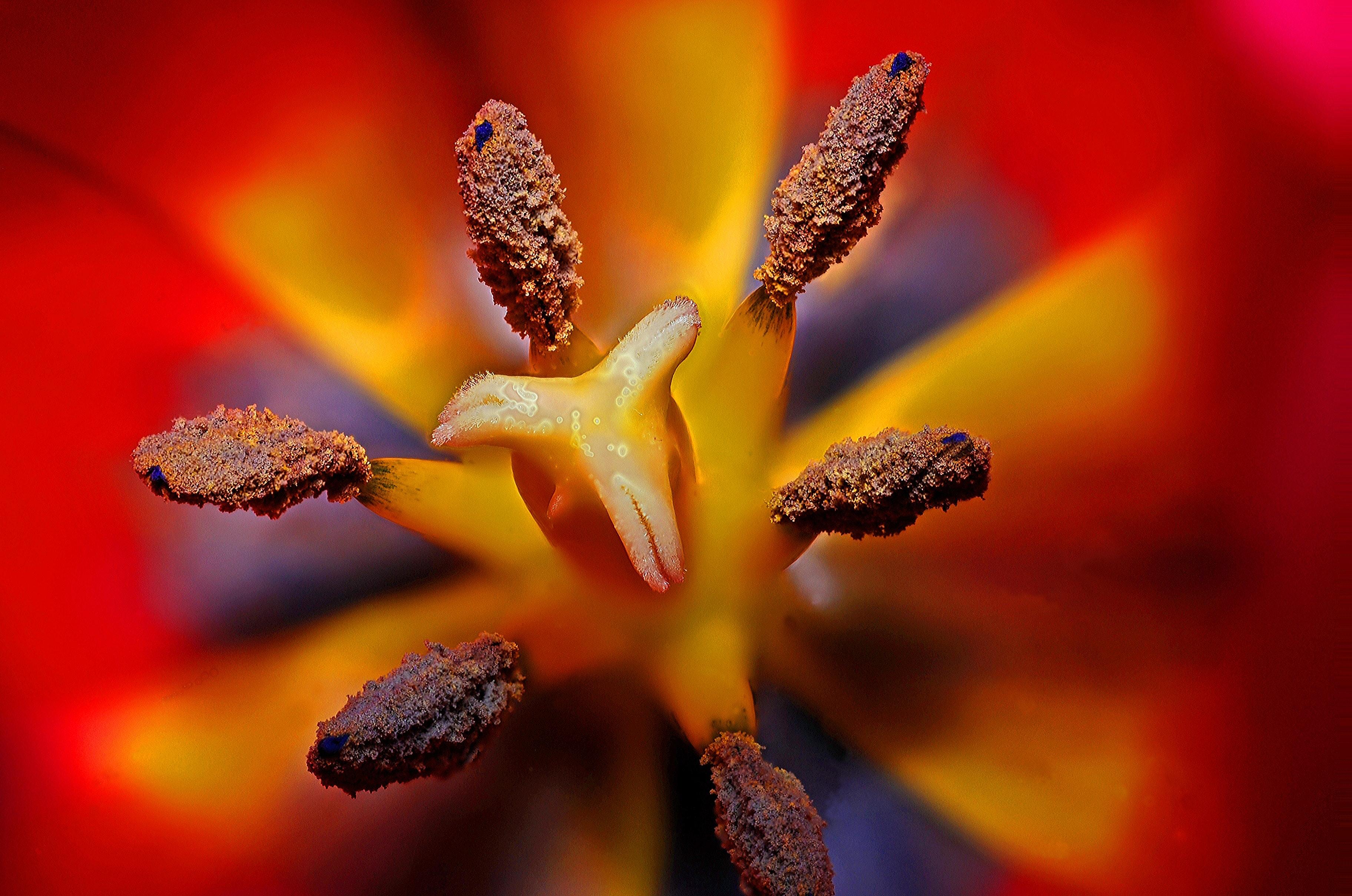 Free Photo Black Yellow And Red Flower Stigma In Tilt Shift Lens