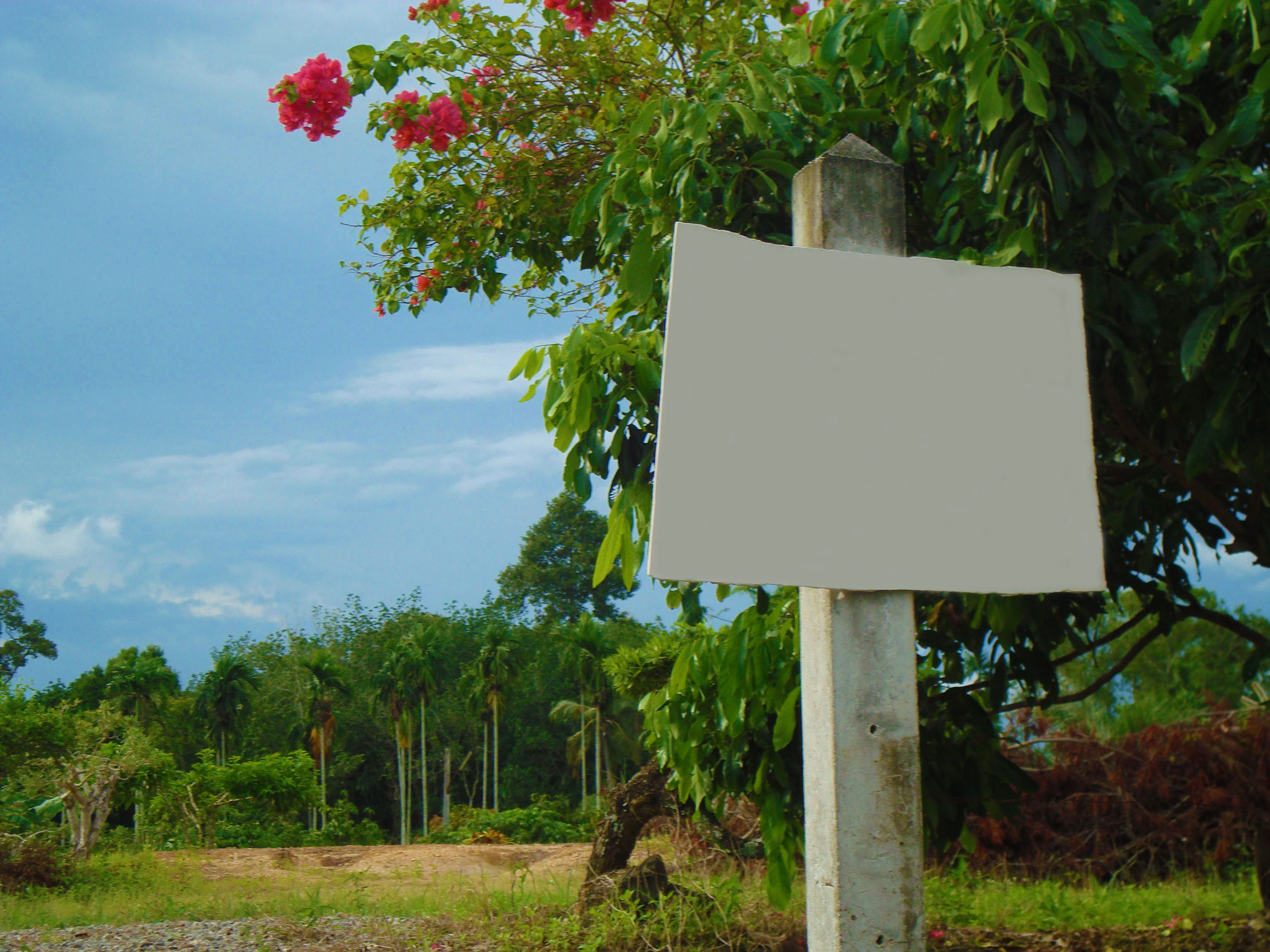 Blank Land For Sale Sign, Area, Notice, Trees, Sign, HQ Photo