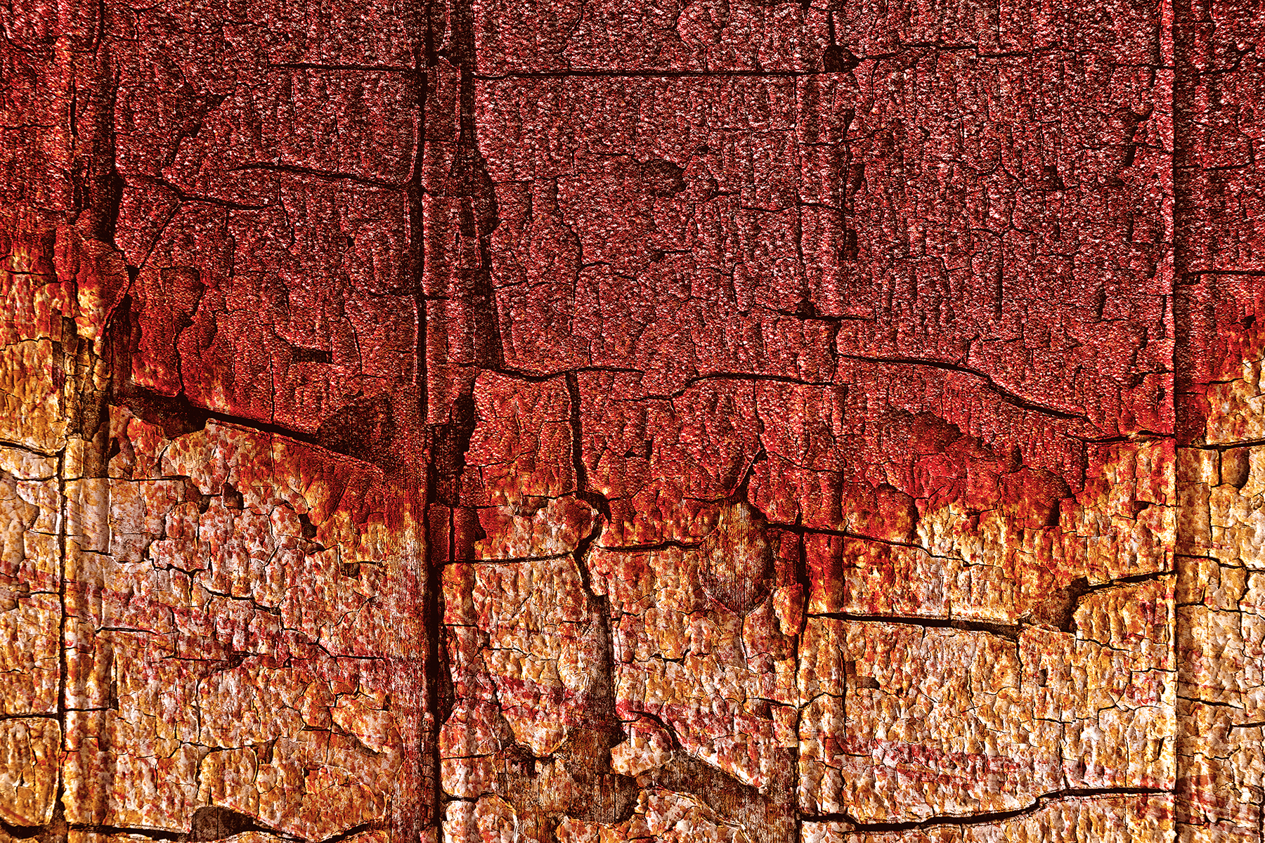 Vibrant wood decay photo