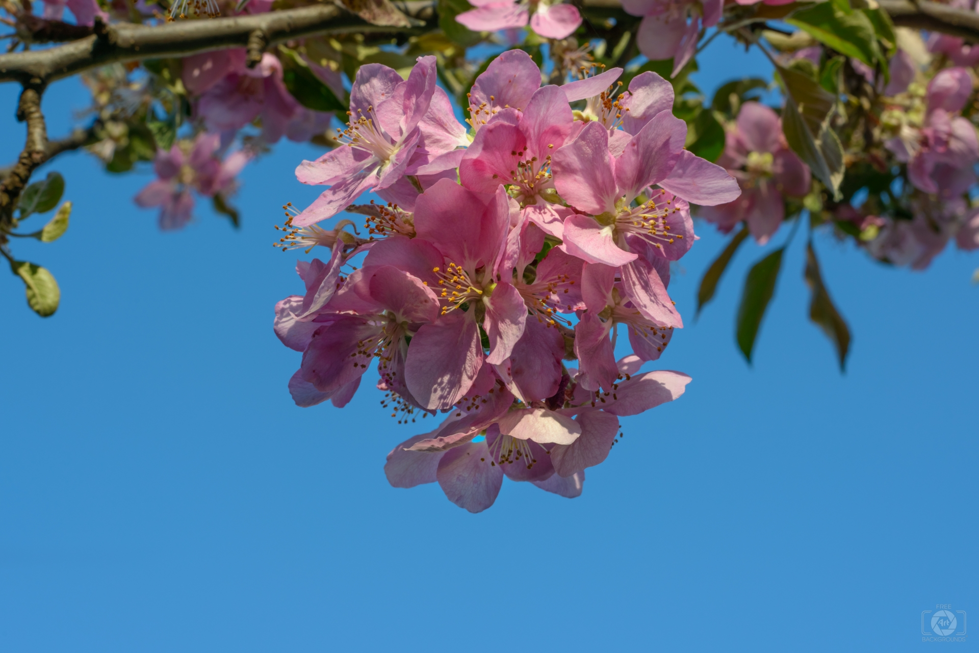 Free photo: Blooming - nature, yellow, garden - Creative Commons ...