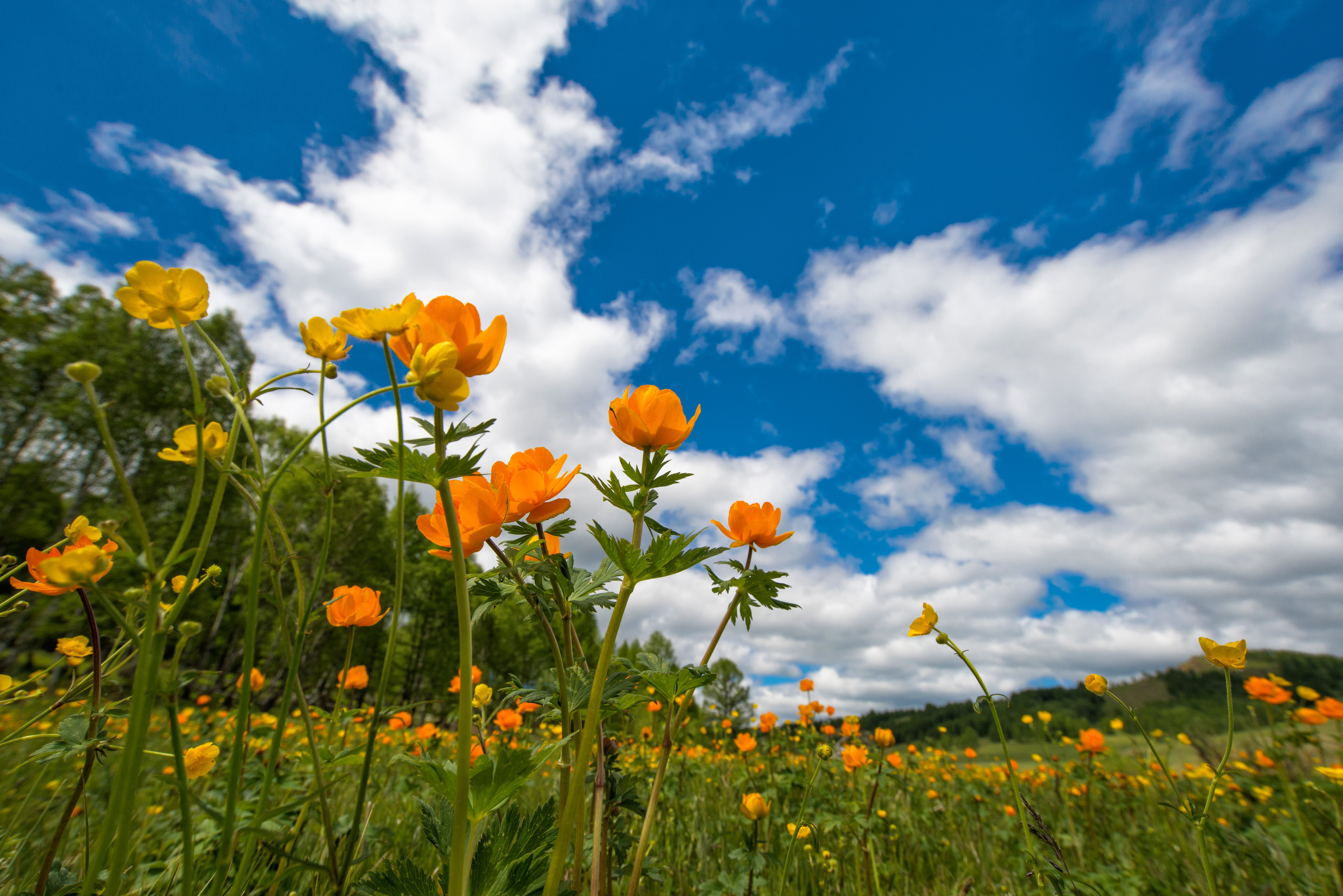 Free photo: Blooming Flowers - garden, nature, spring - Creative ...