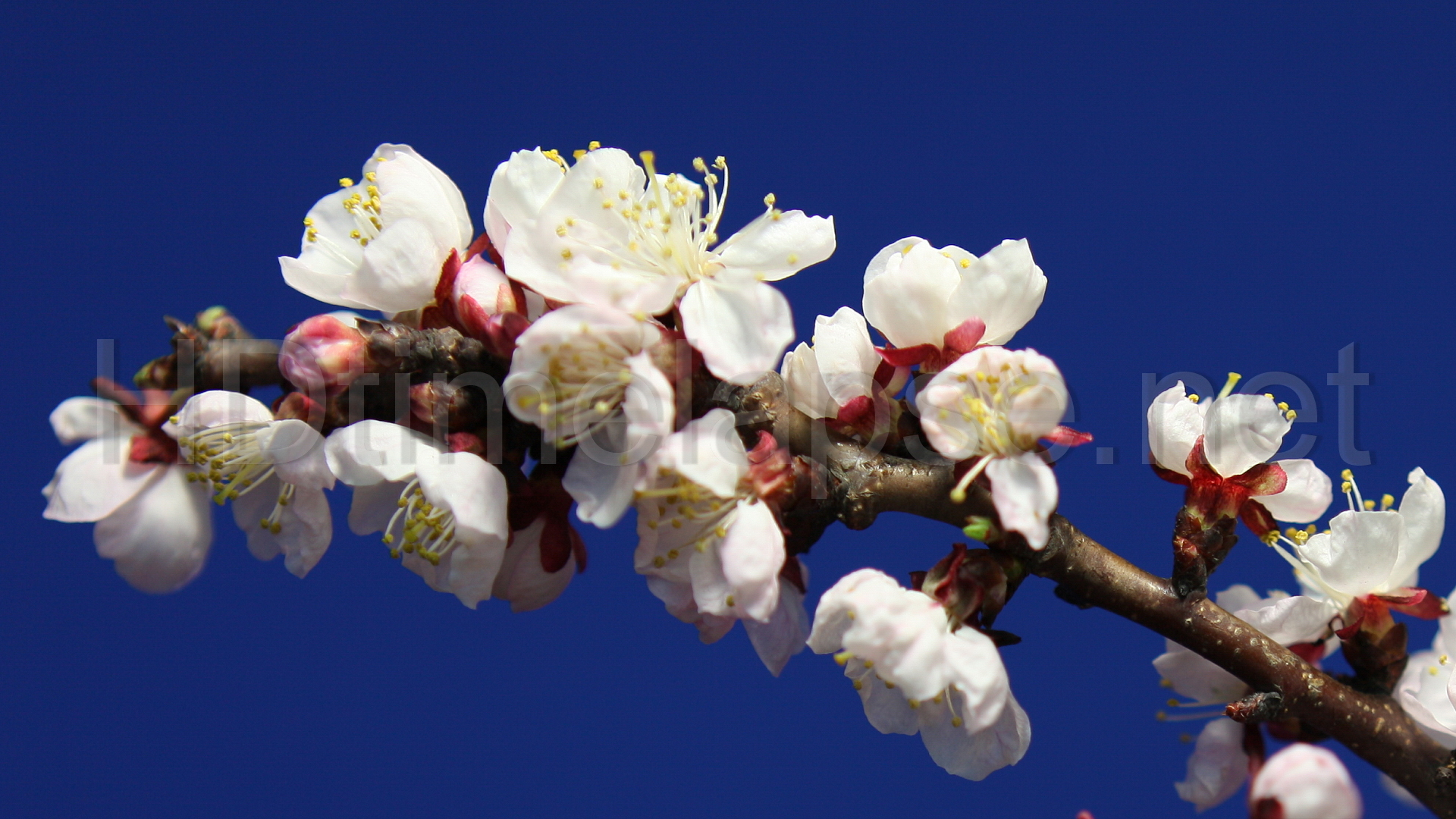 Blooming flowers branch photo