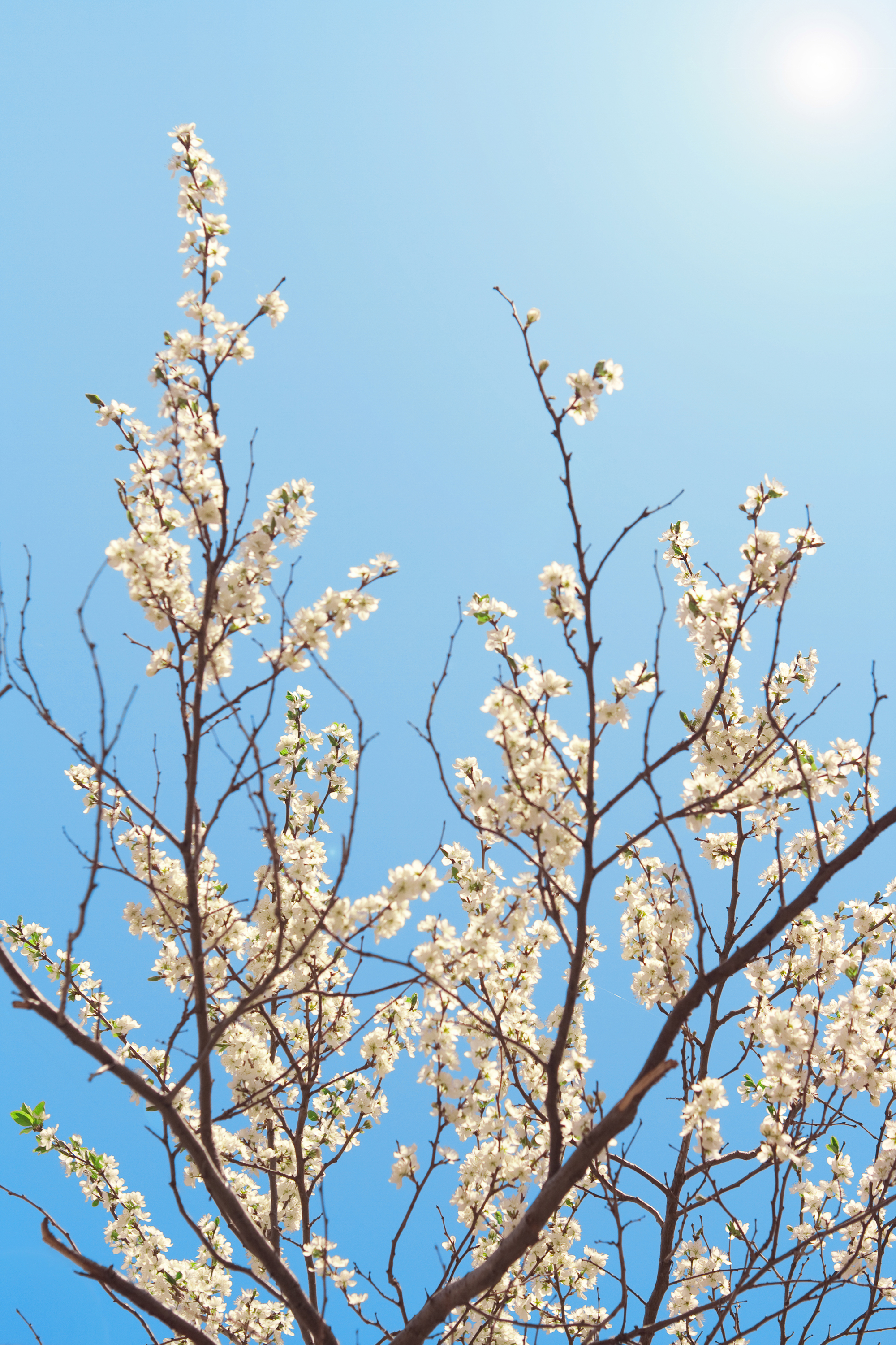 blooming flowers branch, Outdoor, Growth, Japan, Japanese, HQ Photo