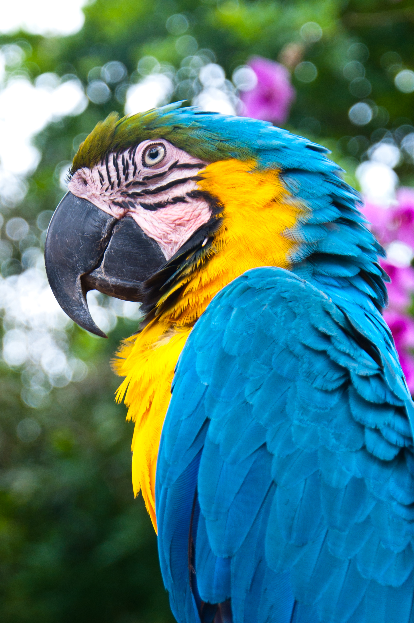 Blue and gold macaw bird photo