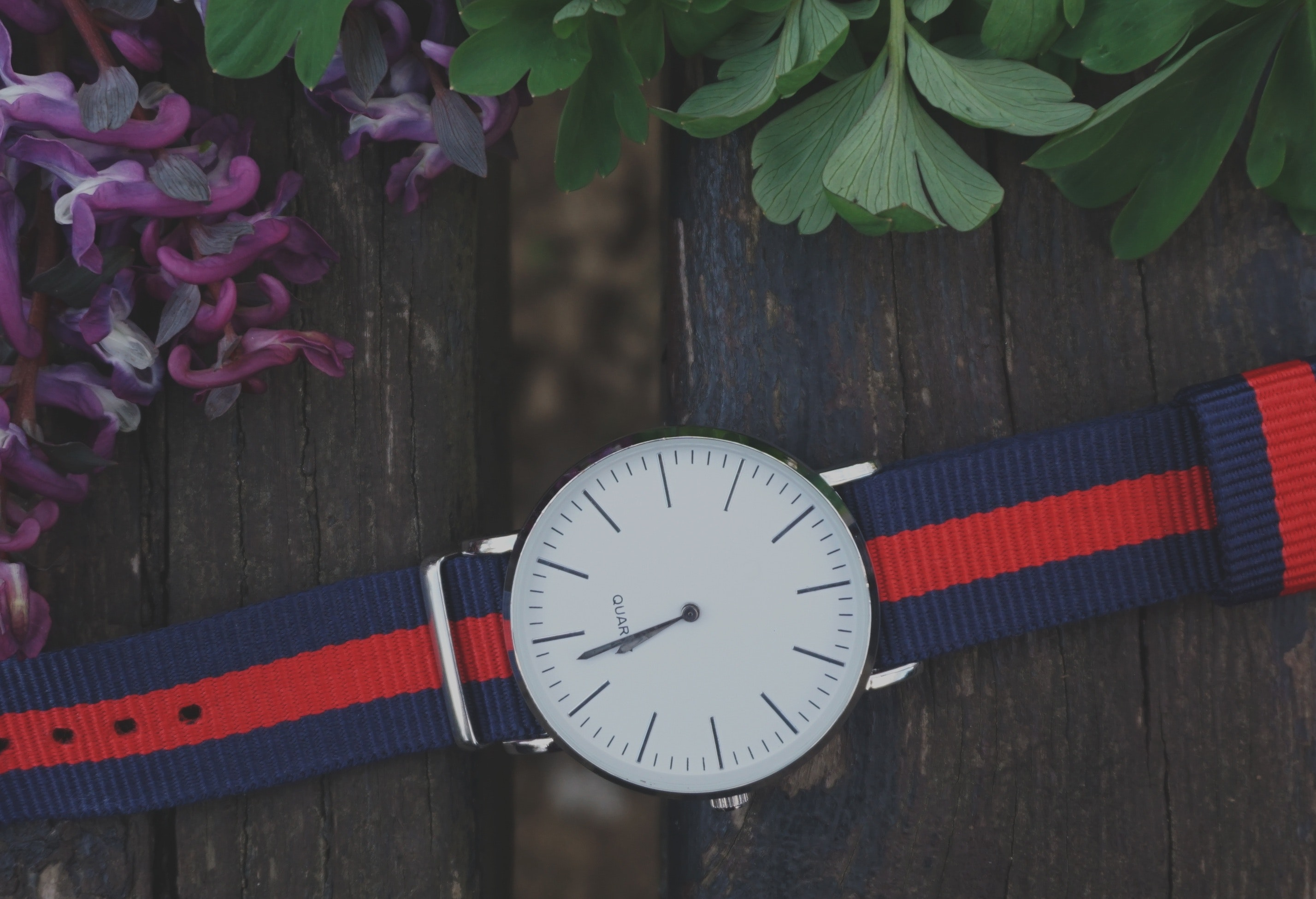 Blue and Red Strap Silver Round Analog Watch Beside Purple and Green Leaf Plant, Accessory, Analog watch, Design, Flora, HQ Photo