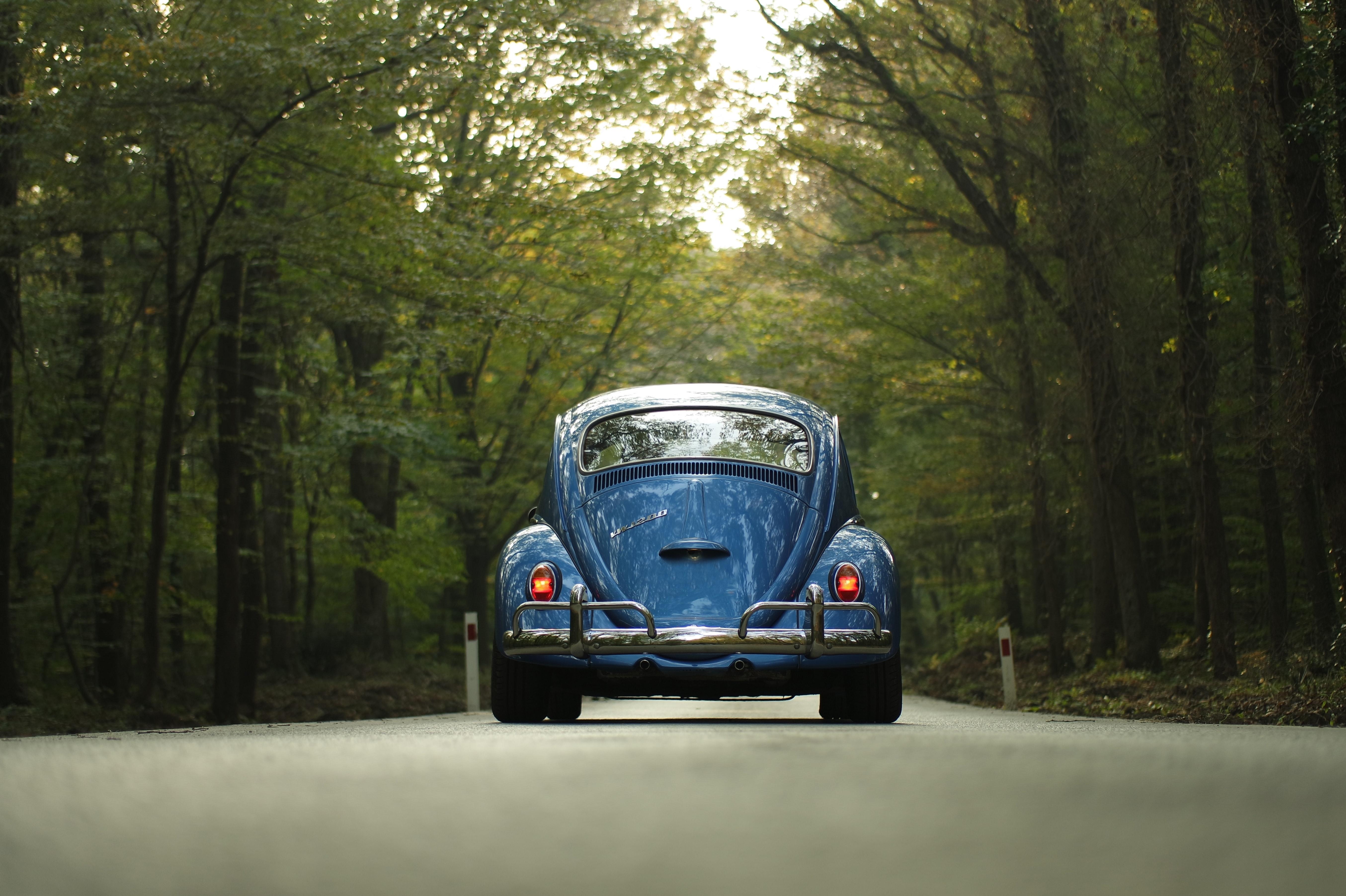 Blue beetle car on gray asphalt road between green leaf trees photo