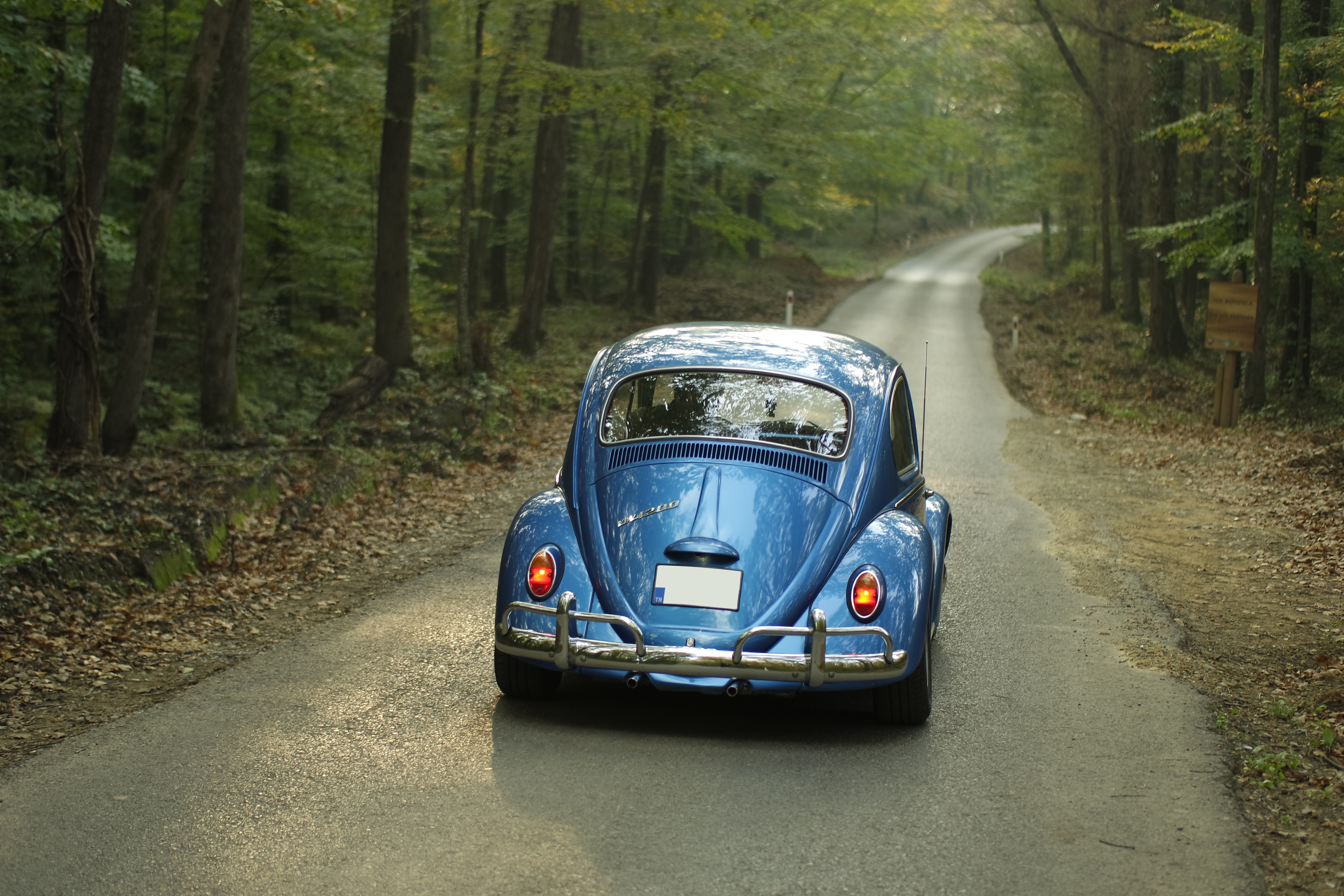 Blue Classic Volkswagen Beetle, Car, Classic car, Drive, Forest, HQ Photo