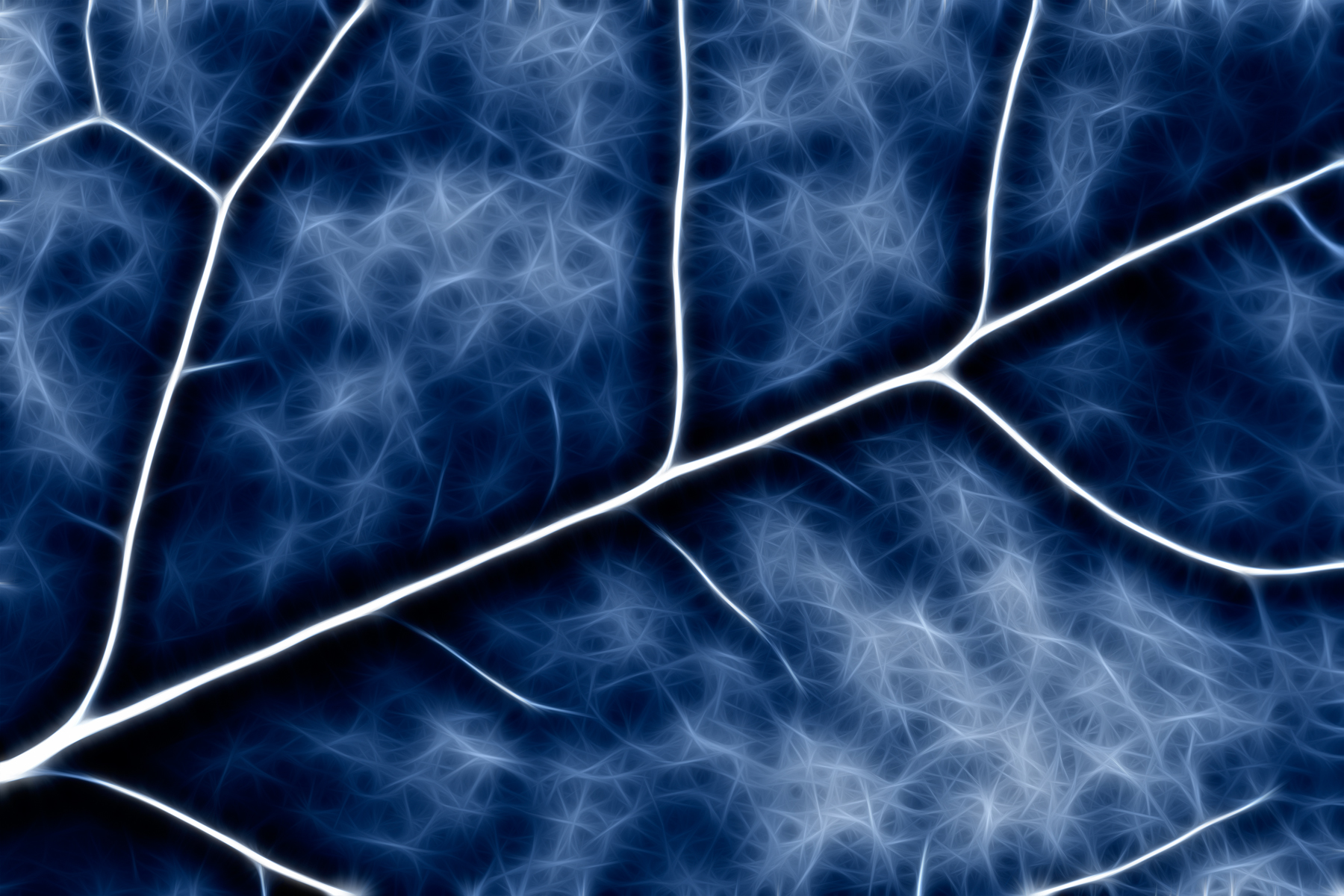 Blue Crucifer Abstract, Natural, Nature, Organic, Photomanipulatio, HQ Photo