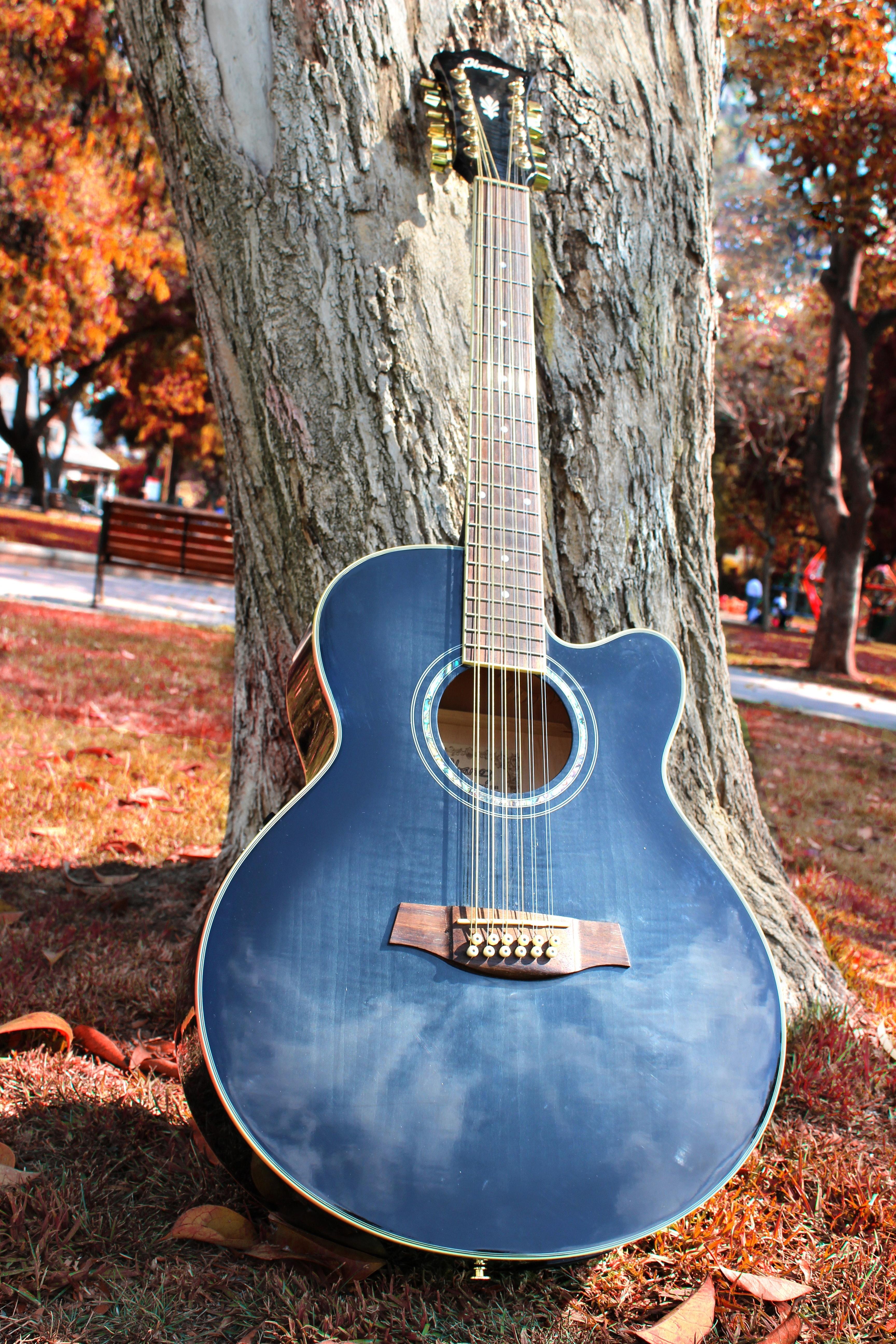 Blue Cut Away 12 String Guitar, Autumn, Fall, Guitar, Musical instrument, HQ Photo