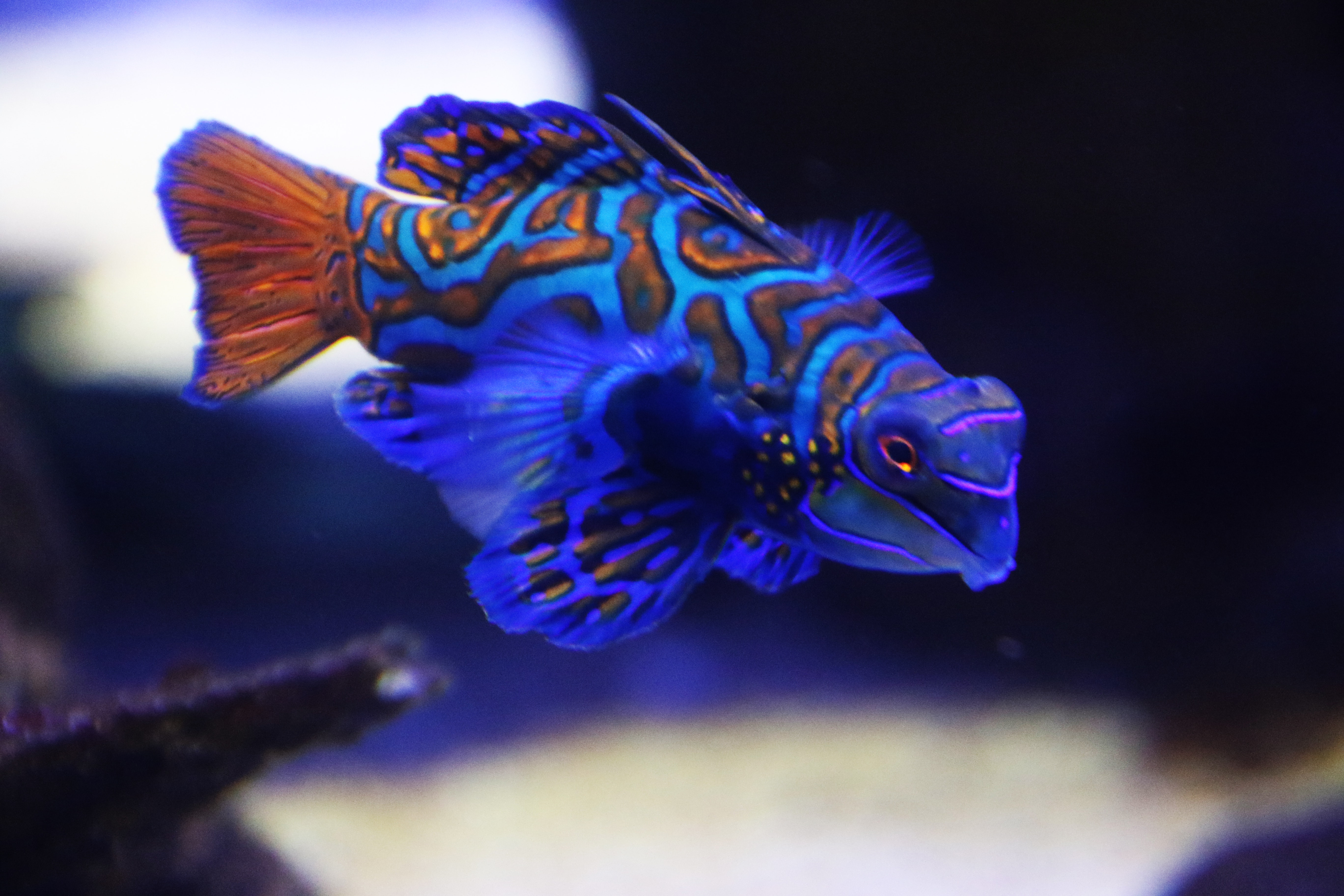 Blue exotic fish in the sea