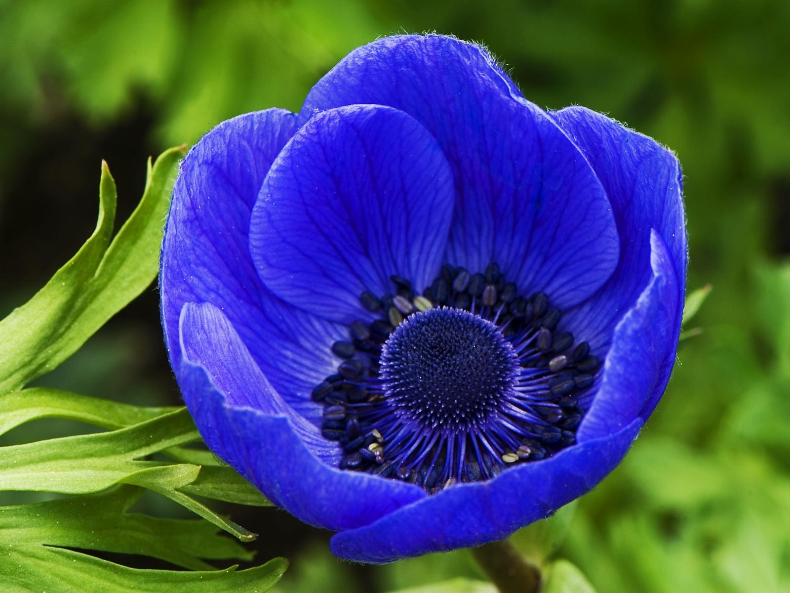 Free photo blue flower nature plants flowers free download blue flower photo izmirmasajfo