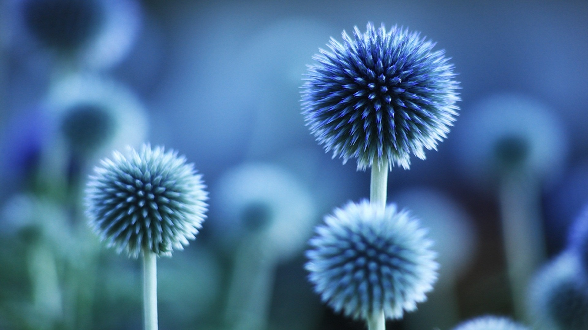 Free photo blue flower organic petals plant free download blue flower hd background get hd wallpapers free izmirmasajfo