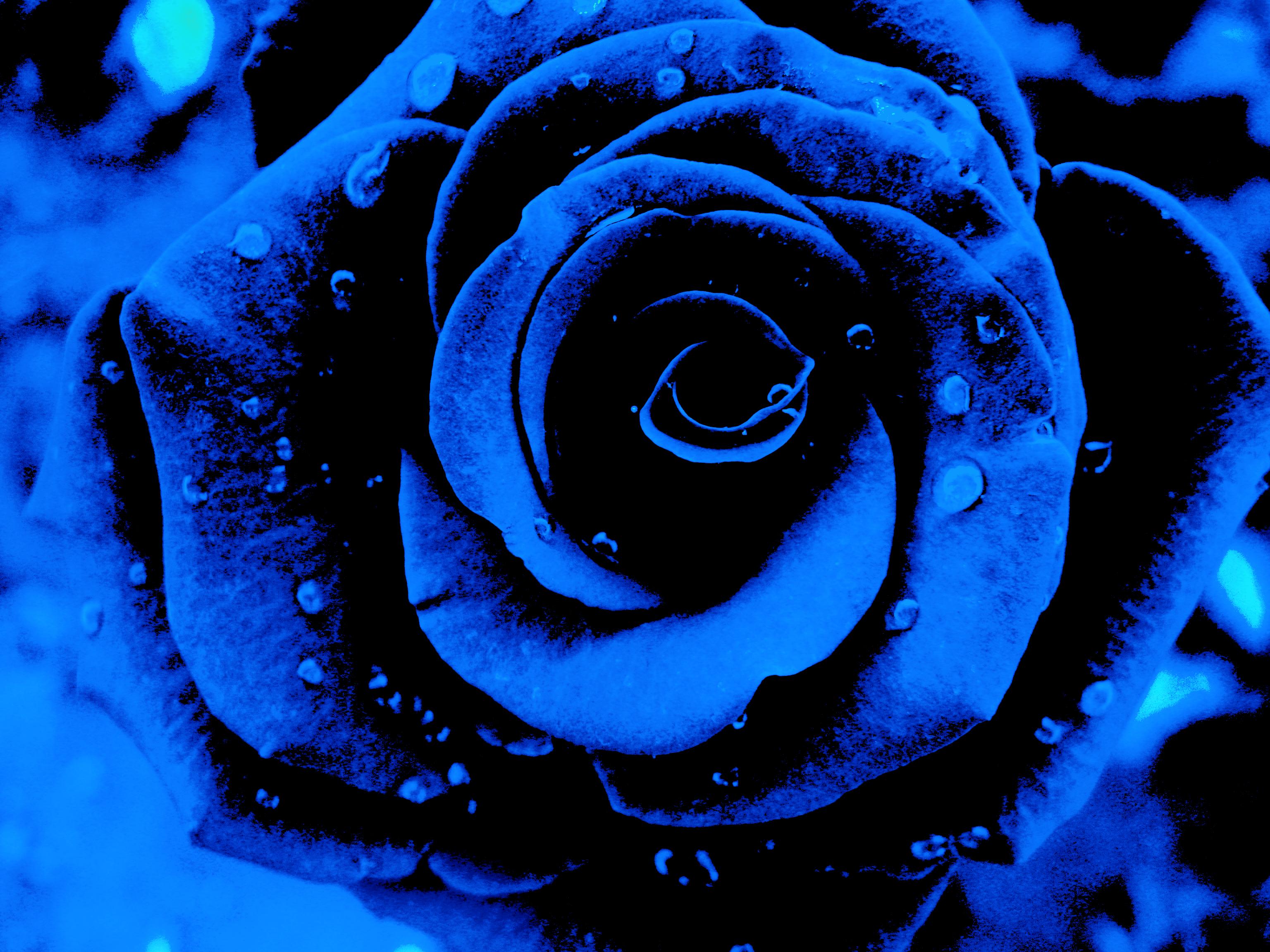 Free photo blue flower nature plants flowers free download a blue flower by kocznarg on deviantart izmirmasajfo