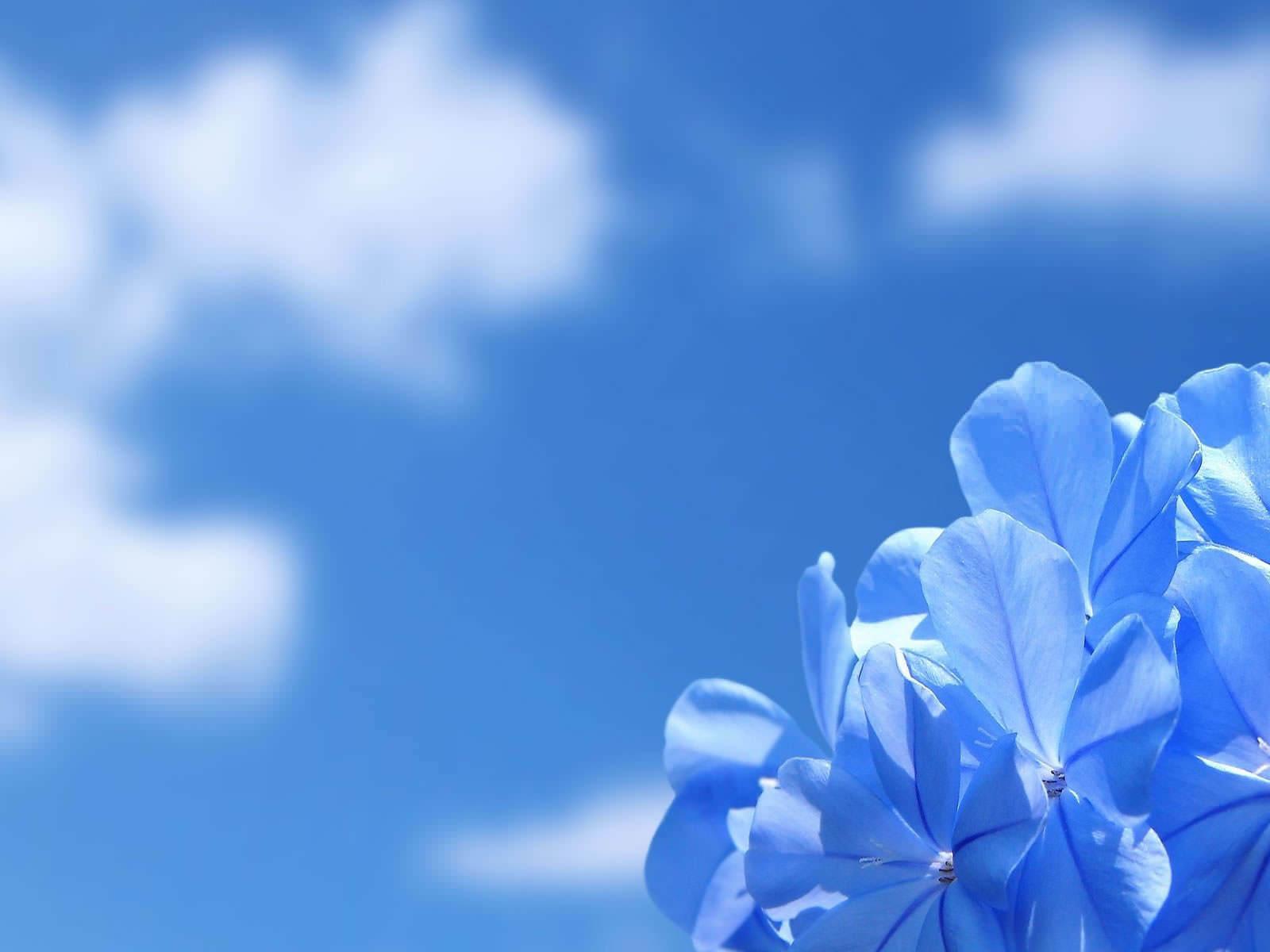 Blue Flower Wallpaper 1600x1200