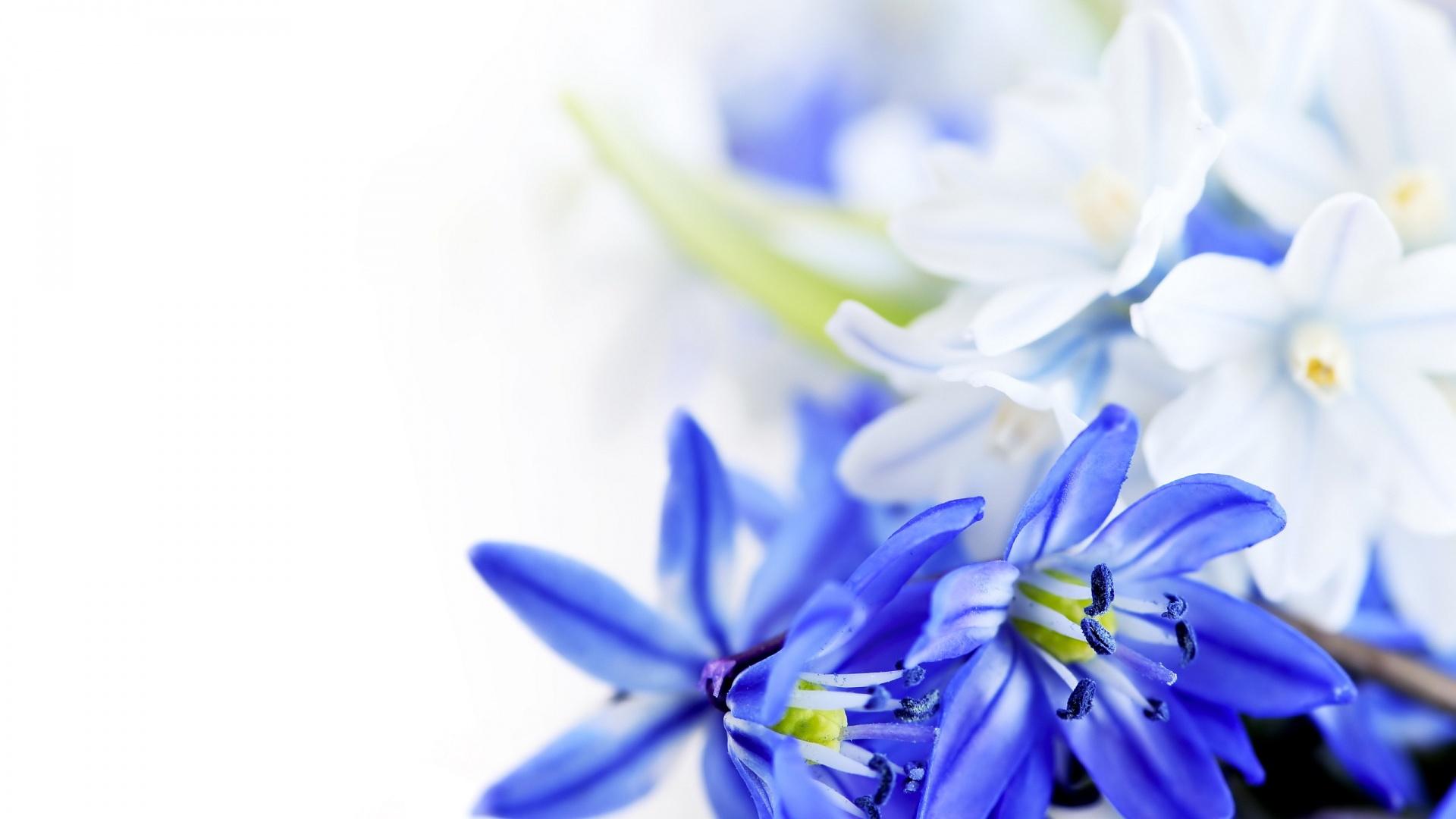 Free Photo Blue Flowers Nature Spring Macro Free Download