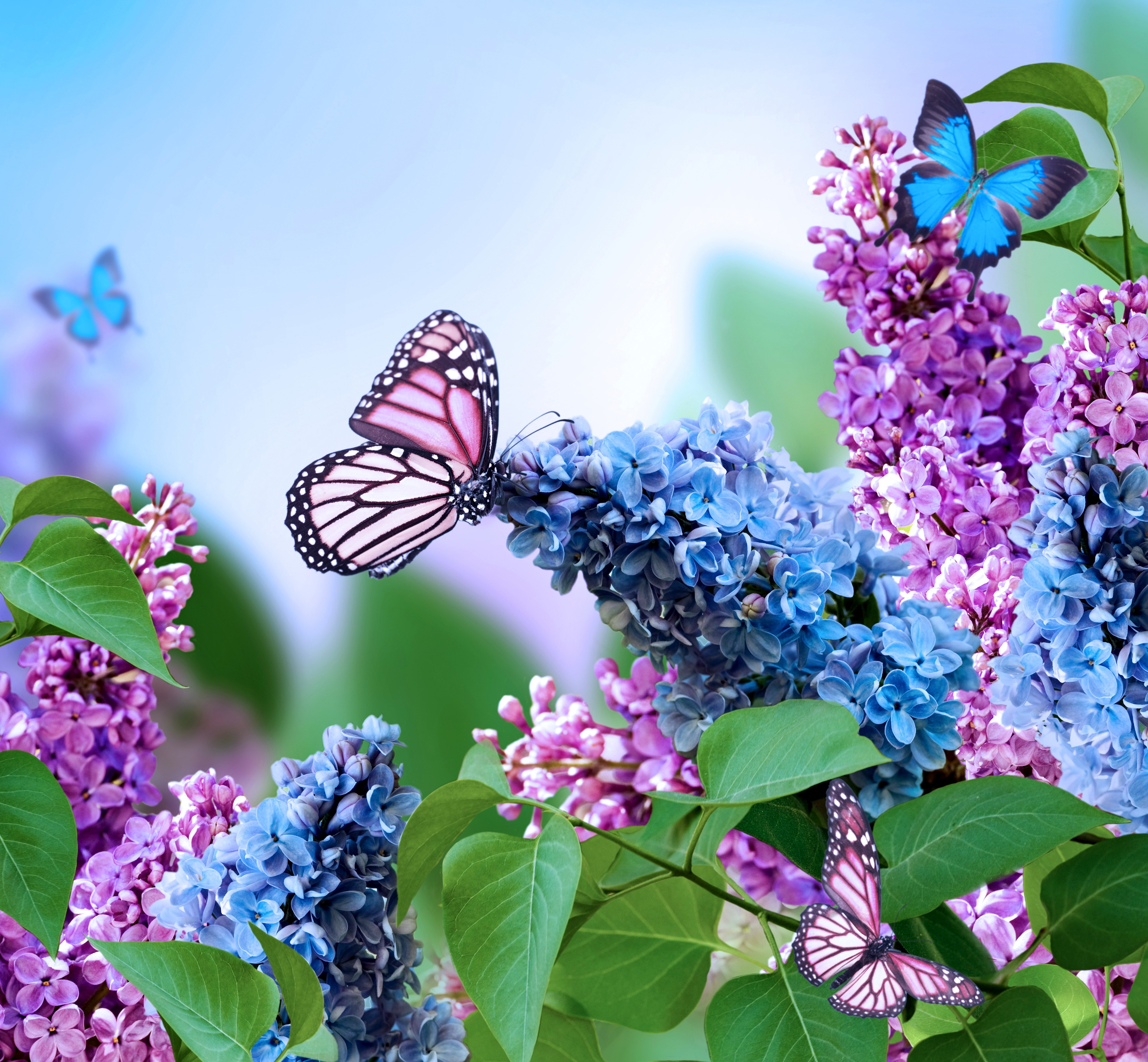 Free photo: Blue flowers bloom - flowers, nature, flower - Non ...