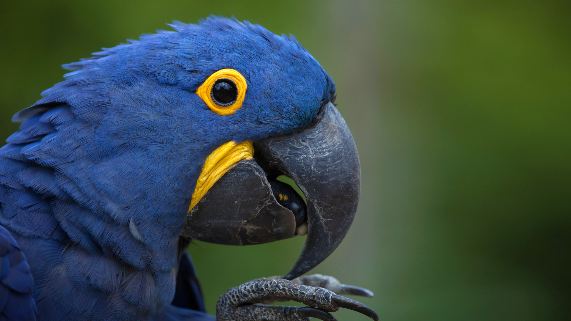 Macaws photo