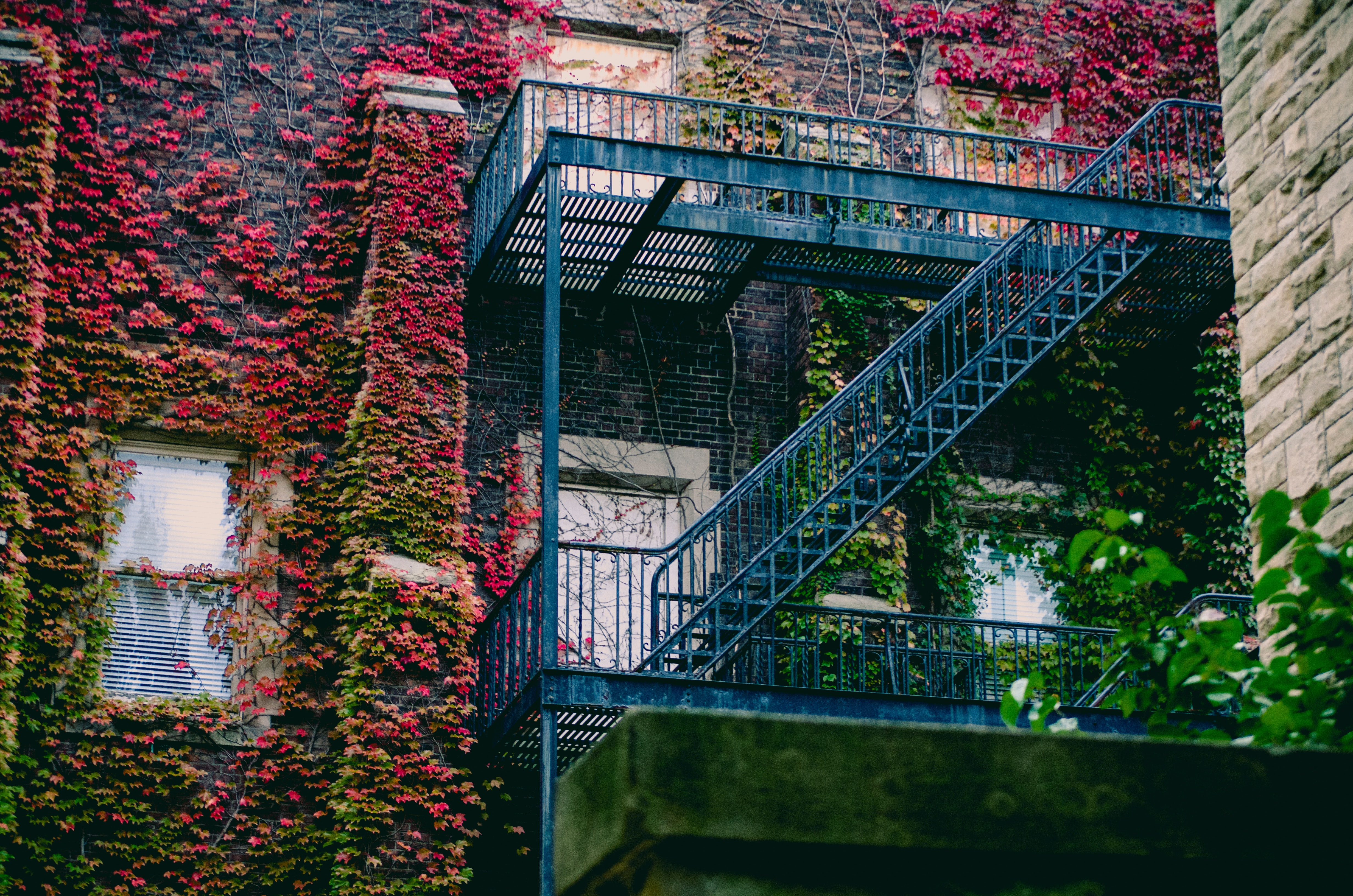 Blue Metal Ladder, Apartment, Overgrown, Ivy, Light, HQ Photo