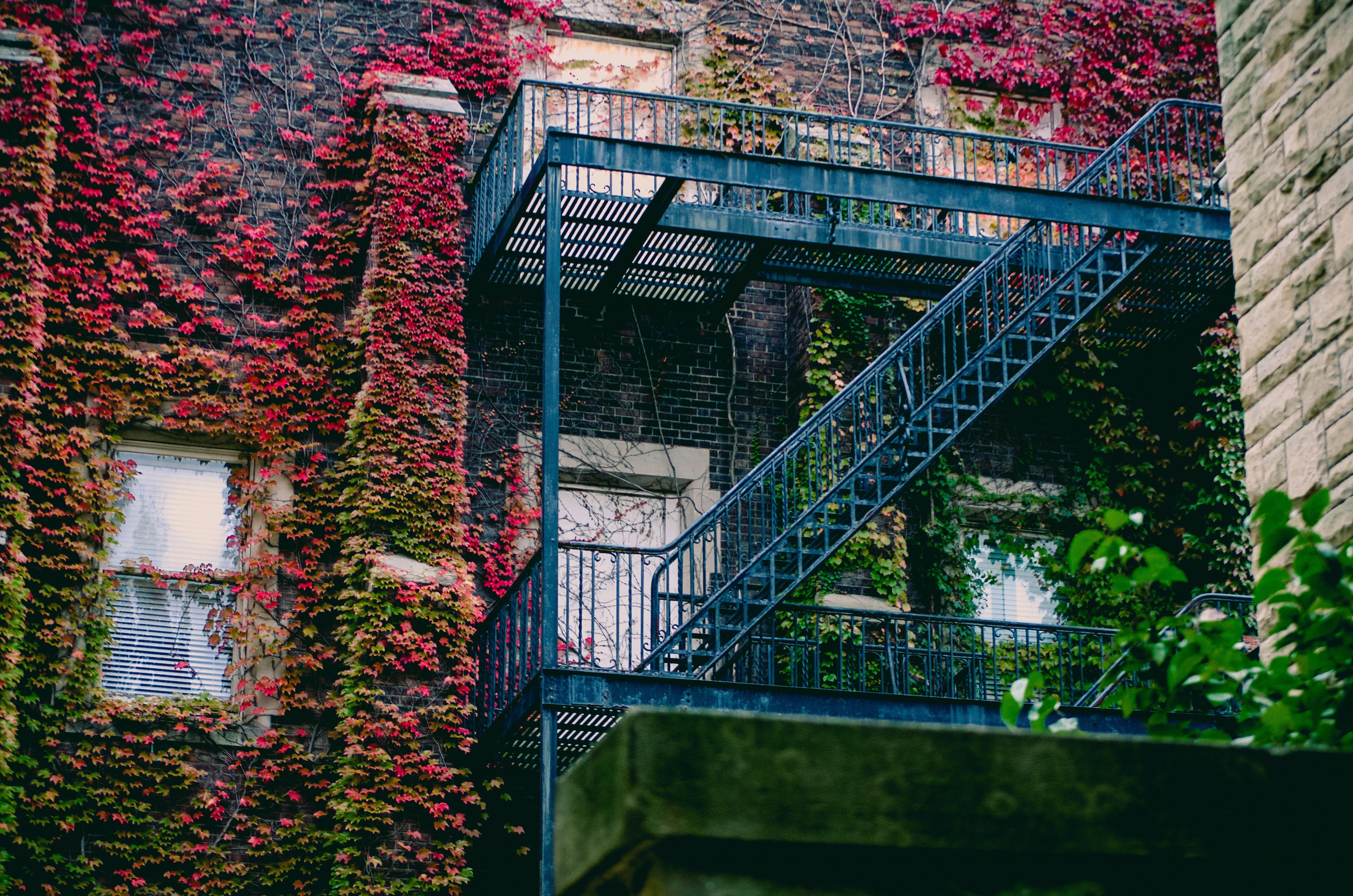Blue Metal Ladder, Apartment, Overgrown, Ivy, Light, HQ Photo