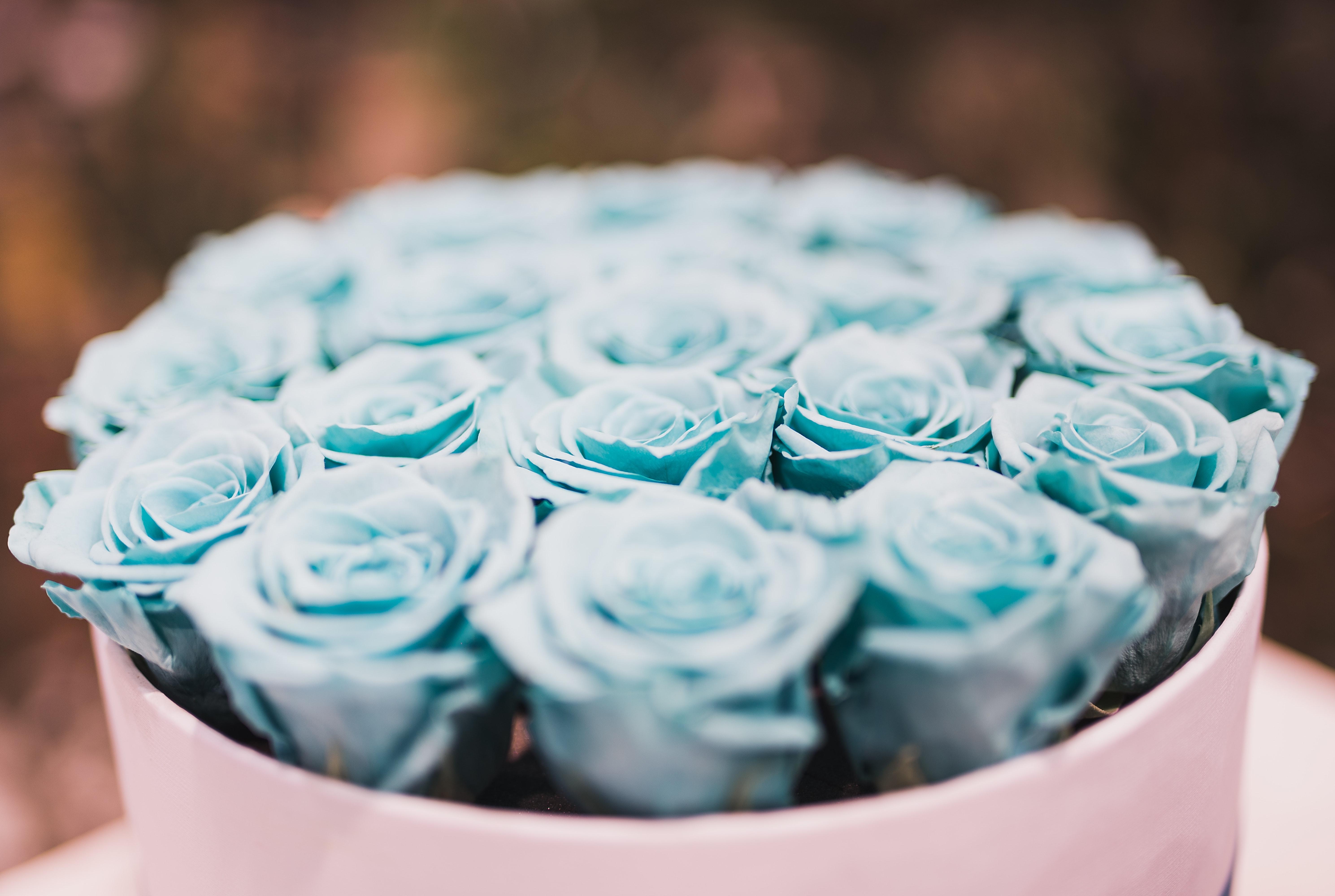 Blue Rose Bouquet Collections, Gift, Love, Petals, Romantic, HQ Photo