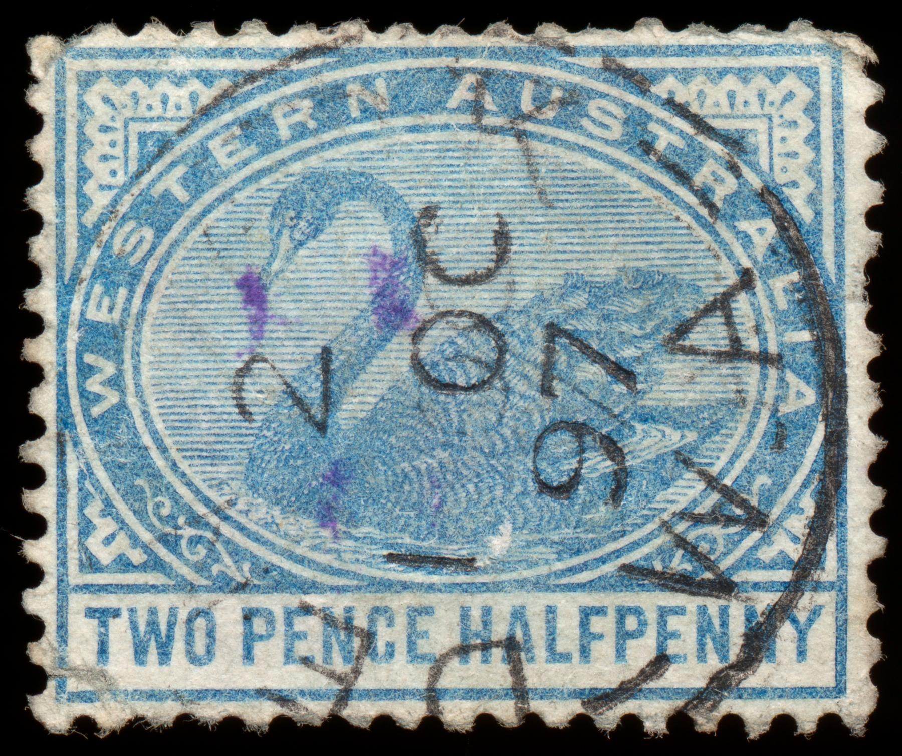 Cyan swan stamp photo