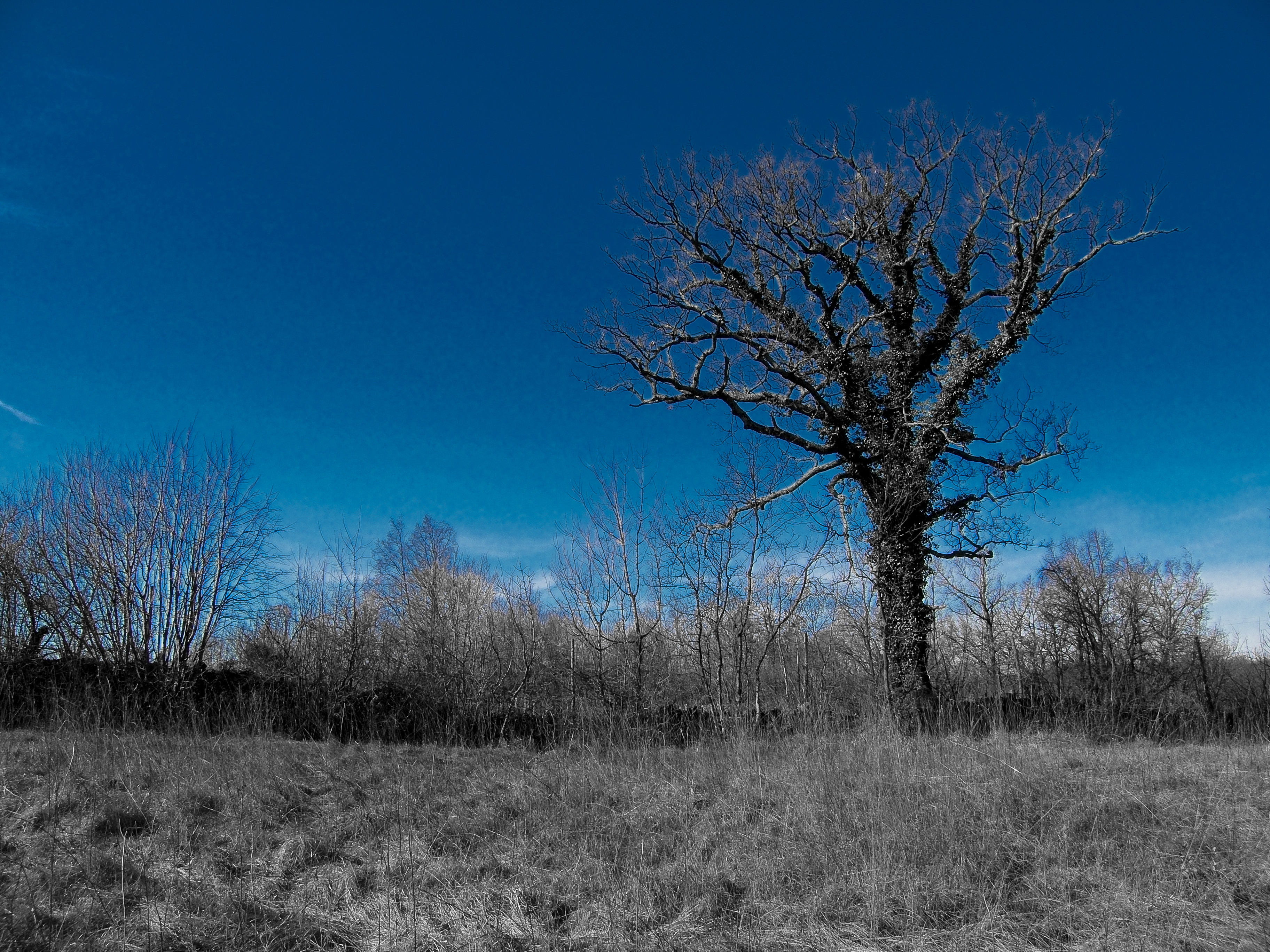 Blue tree, Bare, Blue, Branches, Clouds, HQ Photo