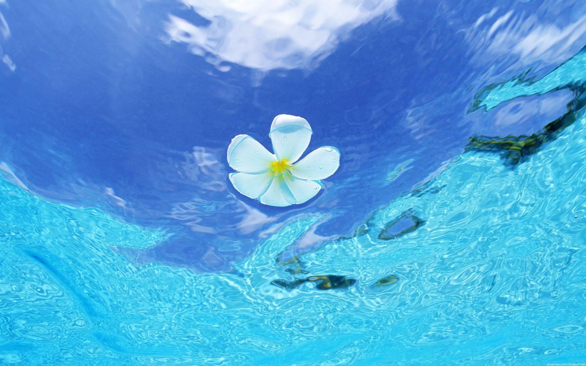 Flower in Blue Water - Wallpaper #219