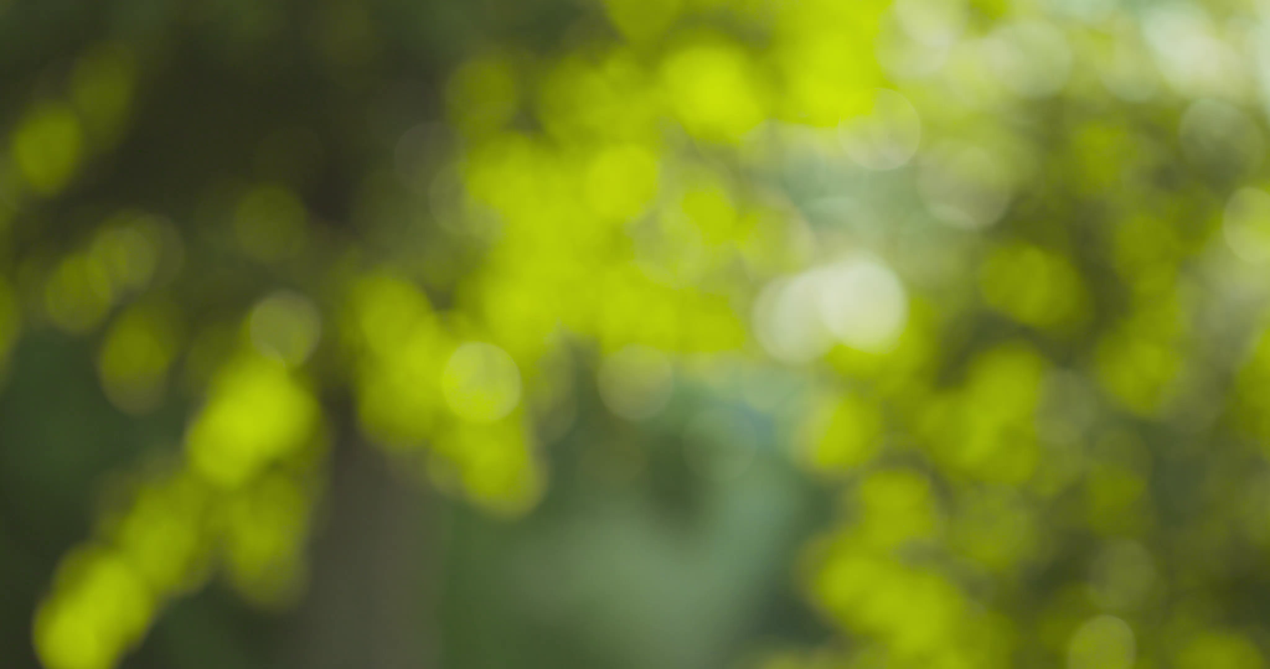 natural summer bokeh blur background with green leaves Stock Video ...
