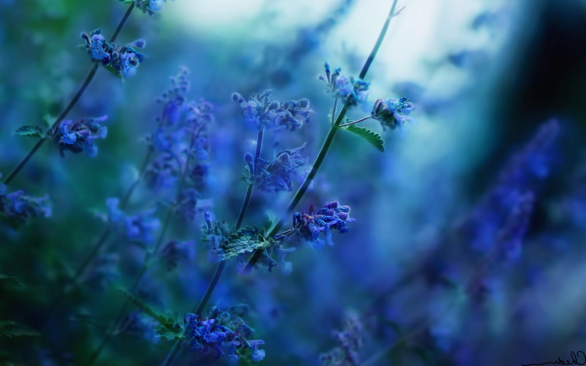 flowers, Nature, Depth Of Field, Sunlight, Blurred, Blue Flowers ...