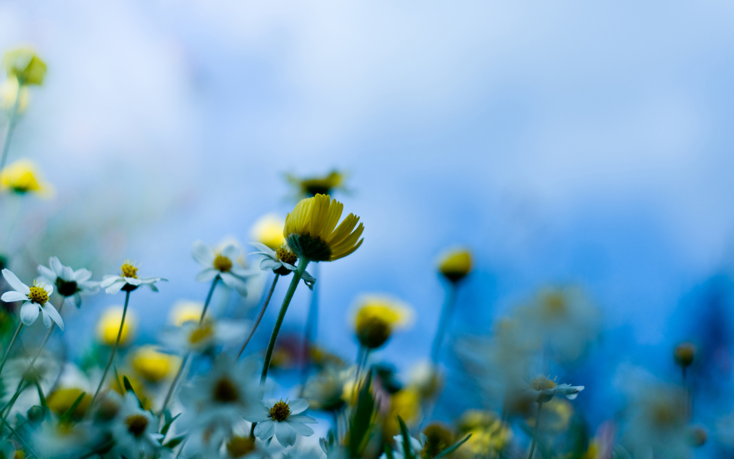 Blurred Background Flowers Nature Yellow - WallDevil