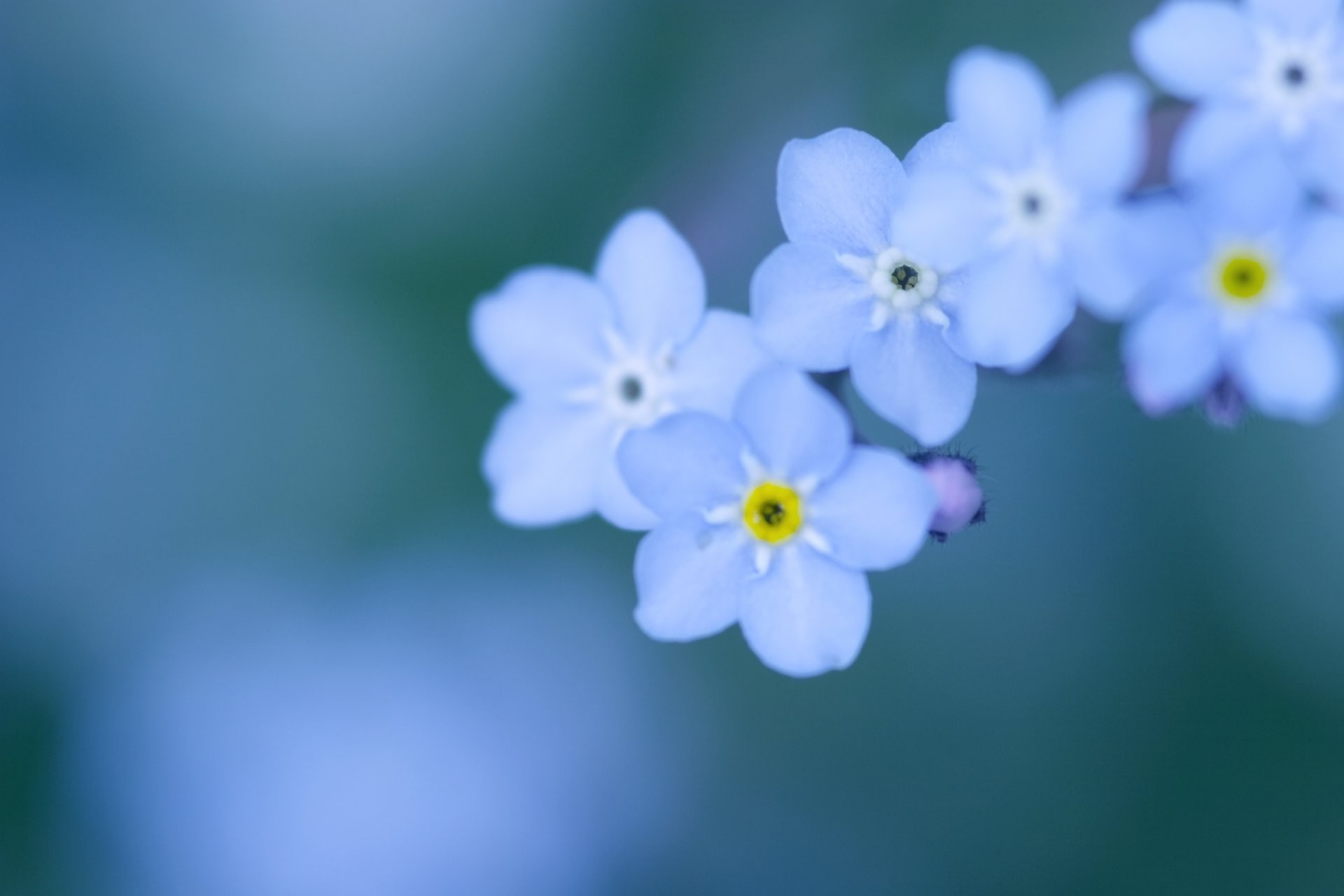 Blue Flowers Background (53+ pictures)