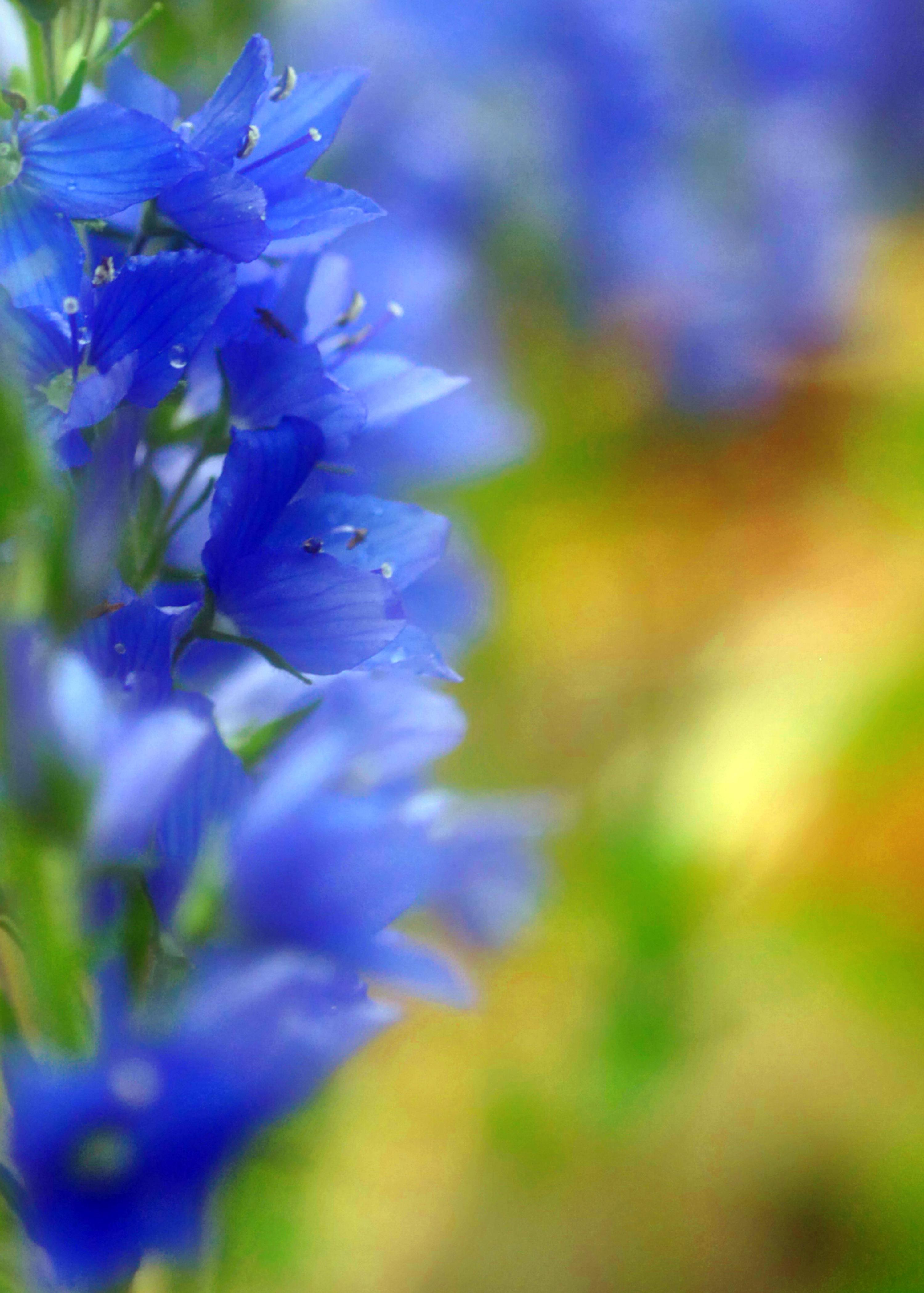 Blurrd Blue Flowers, Summerflowers, Flowerprint, Springsflowers, Poster, HQ Photo