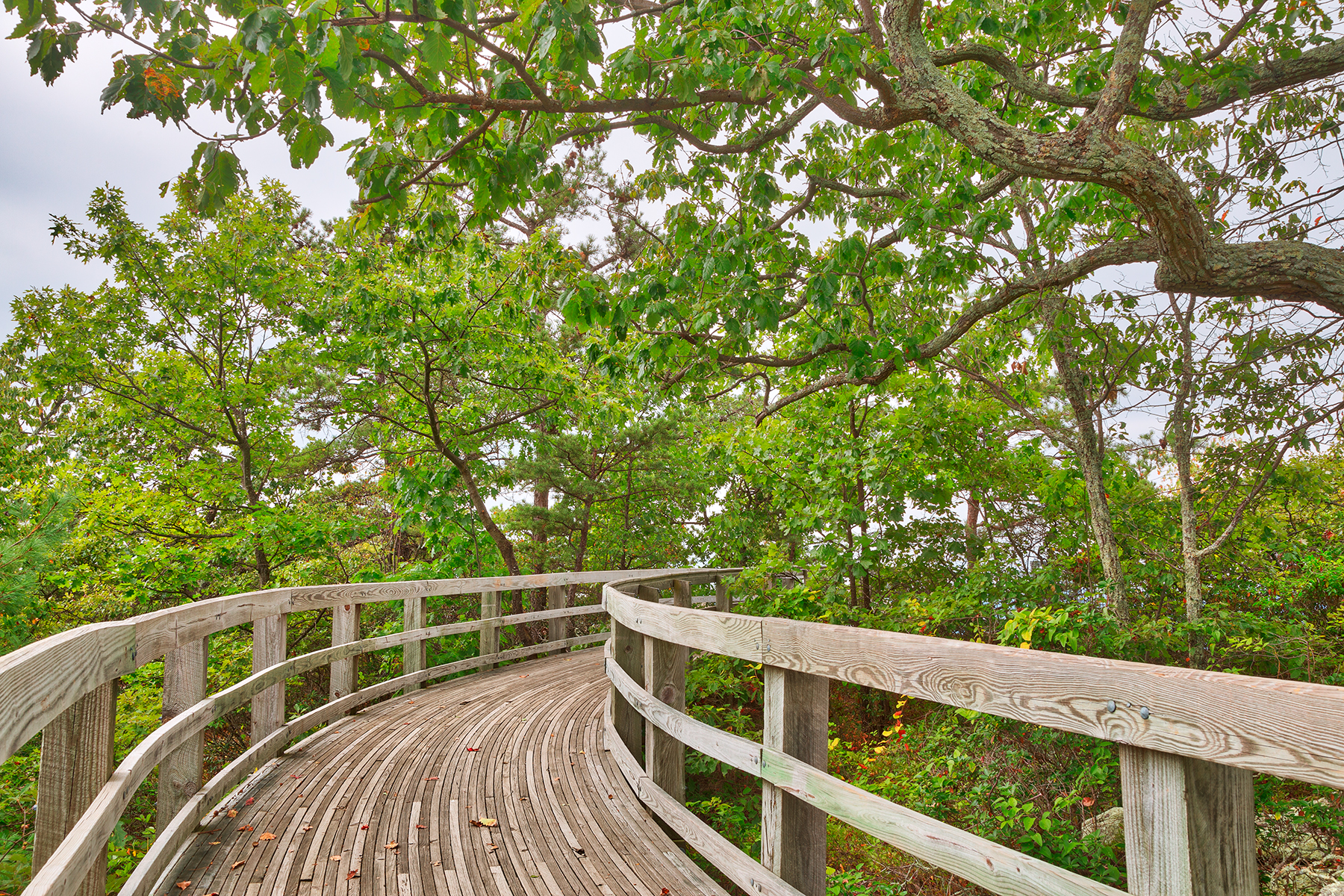 Boardwalk storybook trail - hdr photo